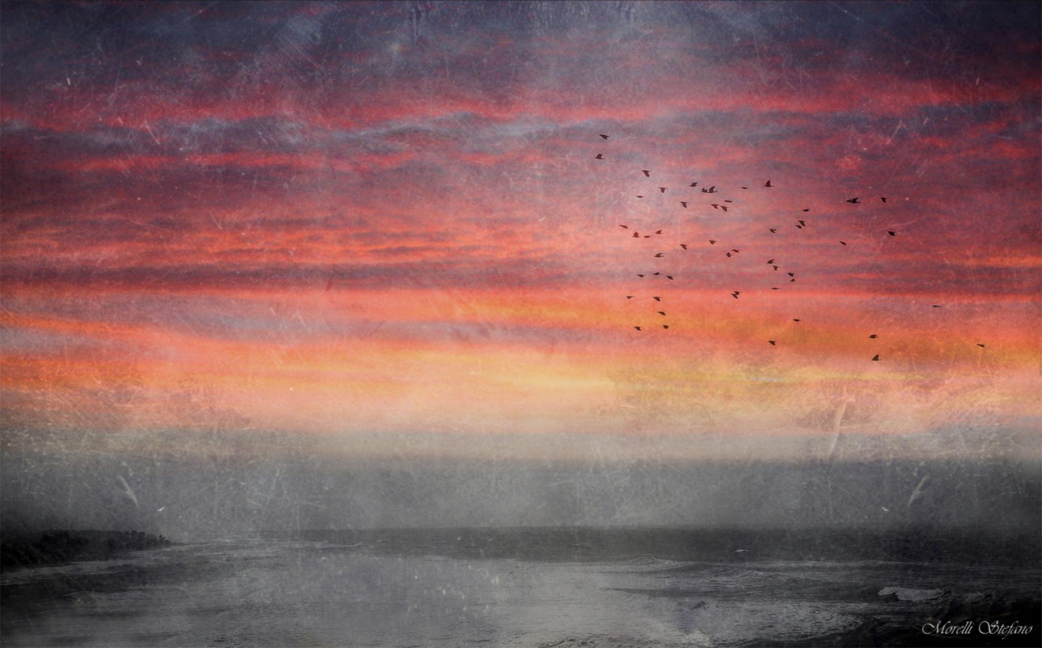 Autunno.....è tempo di migrare.... by Stefano
