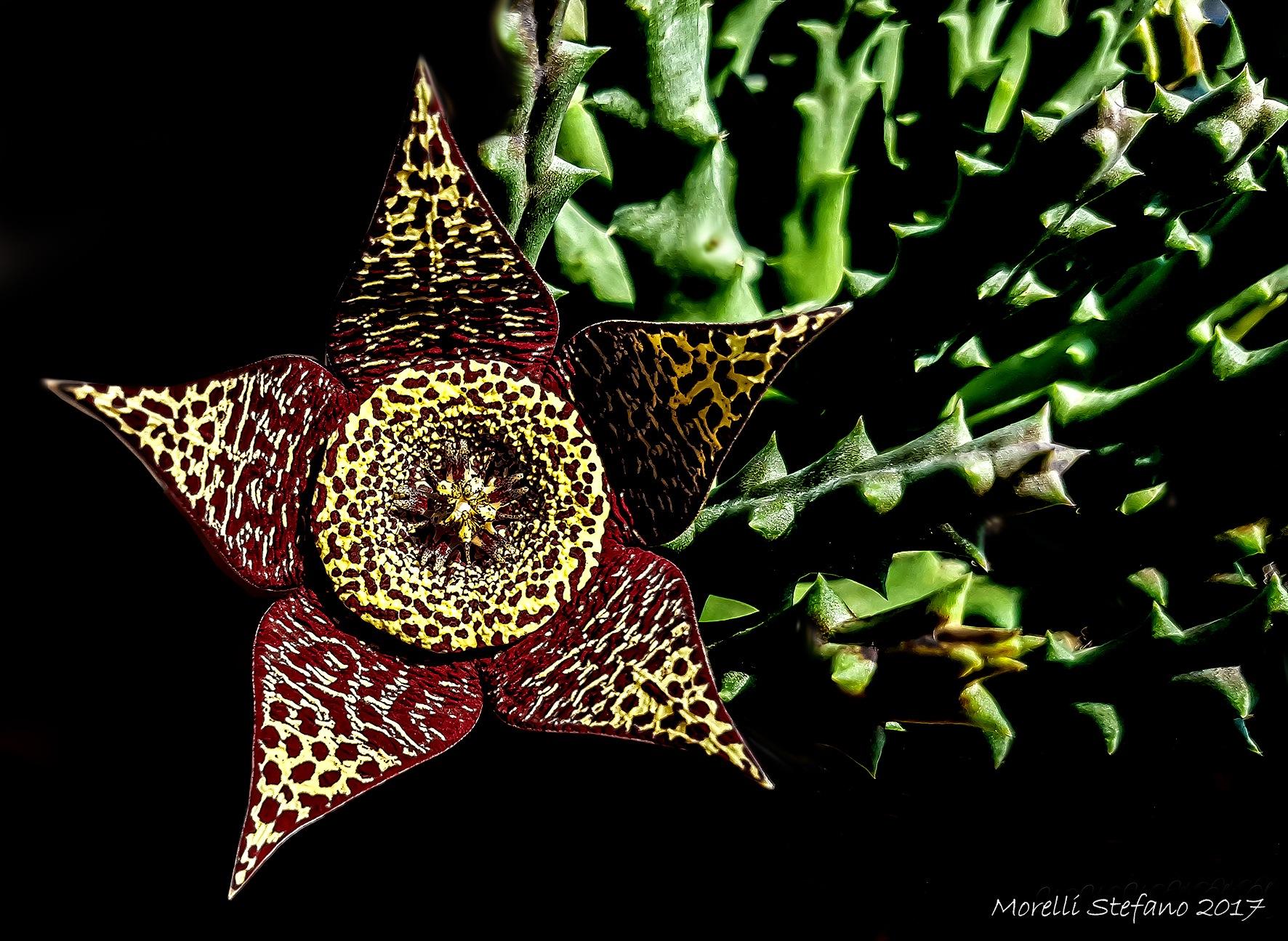 ...oggi...in giardino... by Stefano