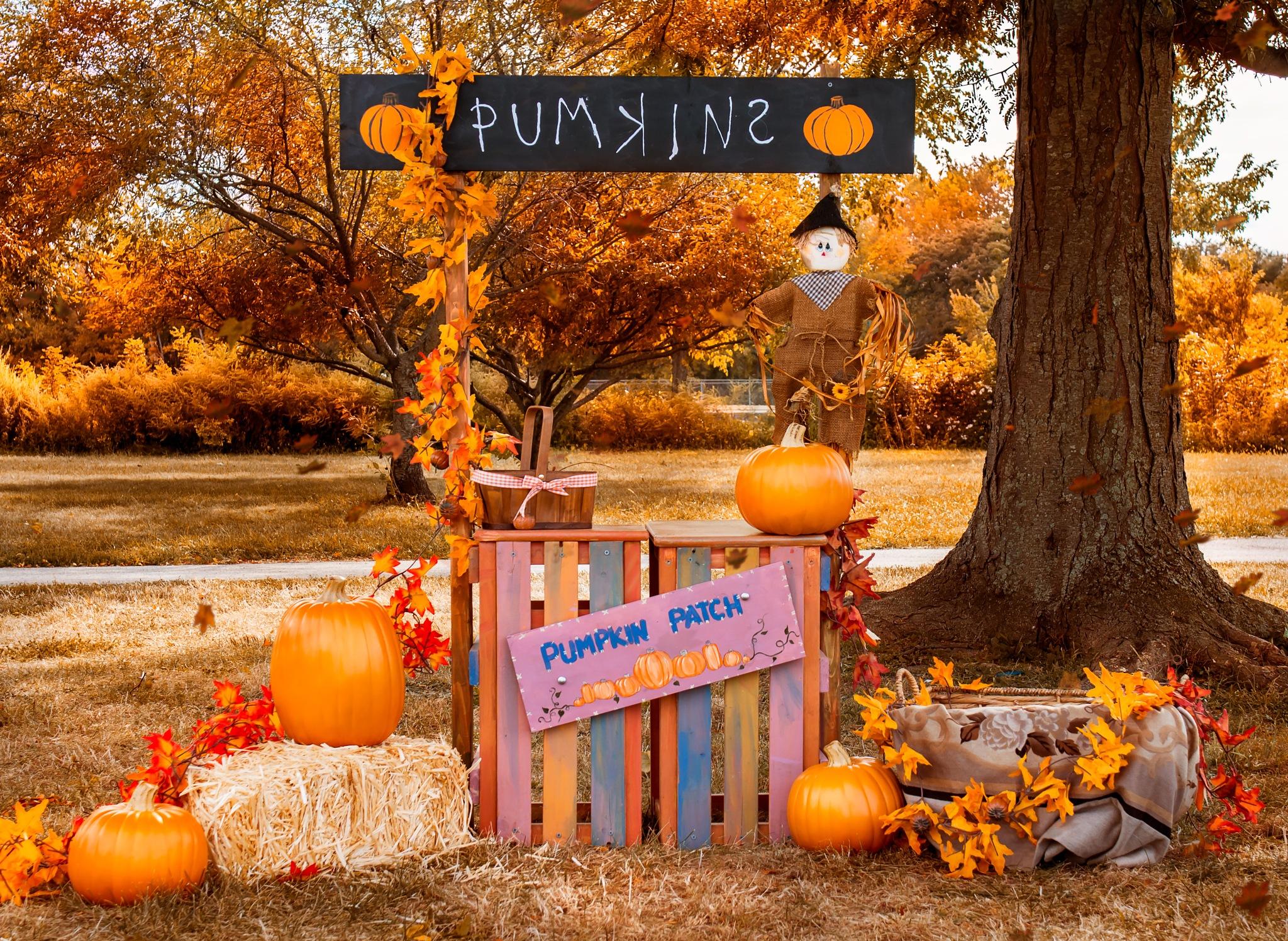 Photo in Random #pumpkin #pumpkin stand #stand #prop #autumn #fall #decoration #pumpkin signs #kids #children