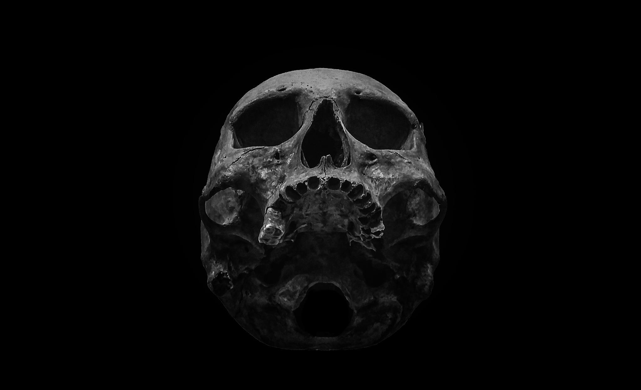 Skull by Gary Tripp