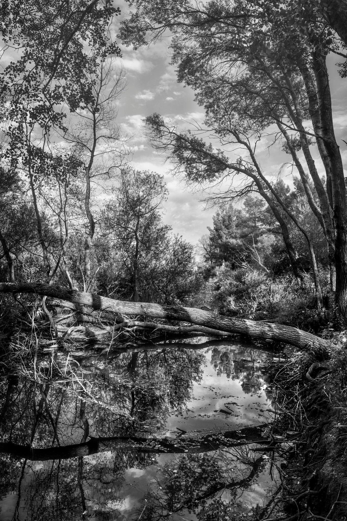 swamp by Stathis Floros