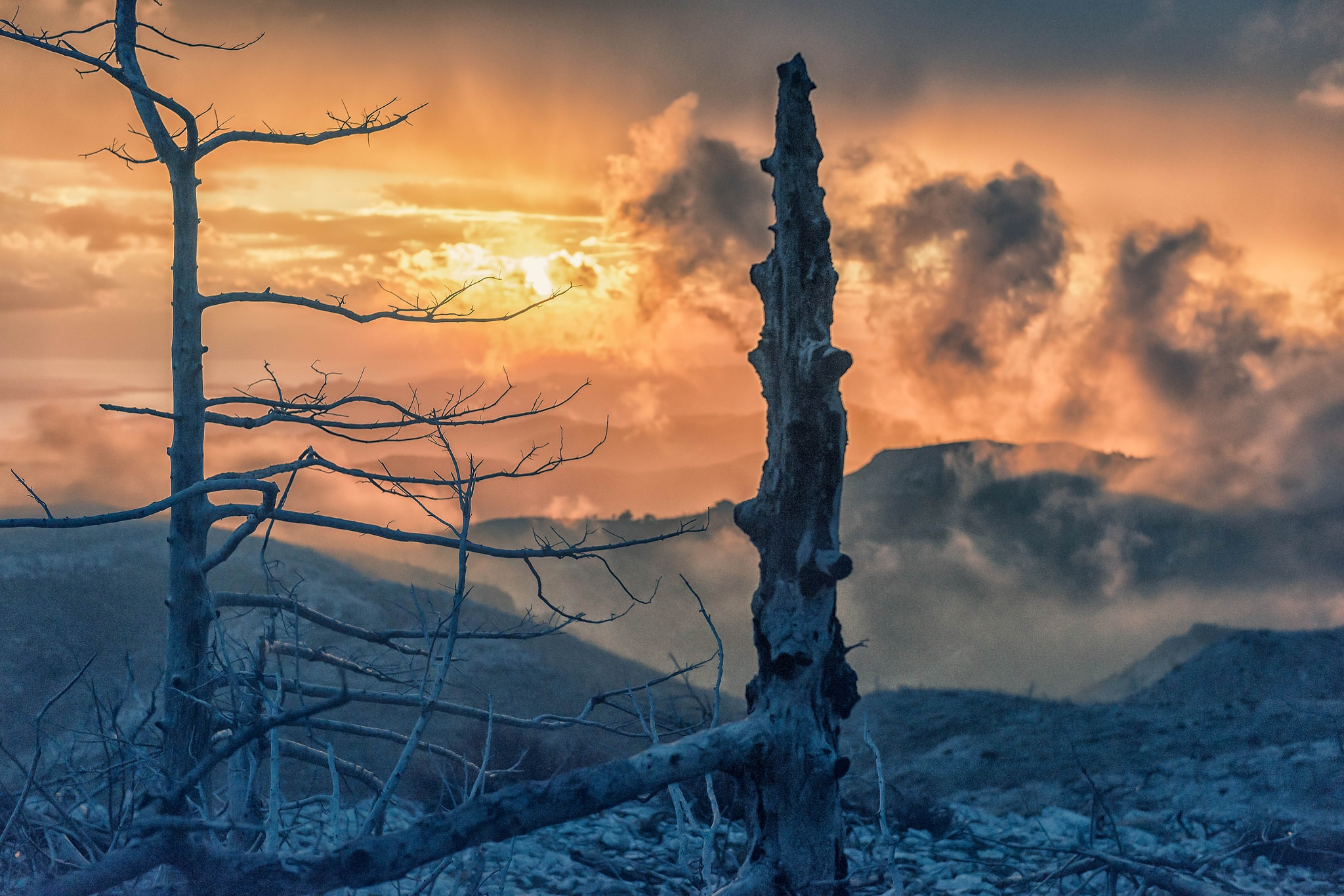 dead trees by Stathis Floros
