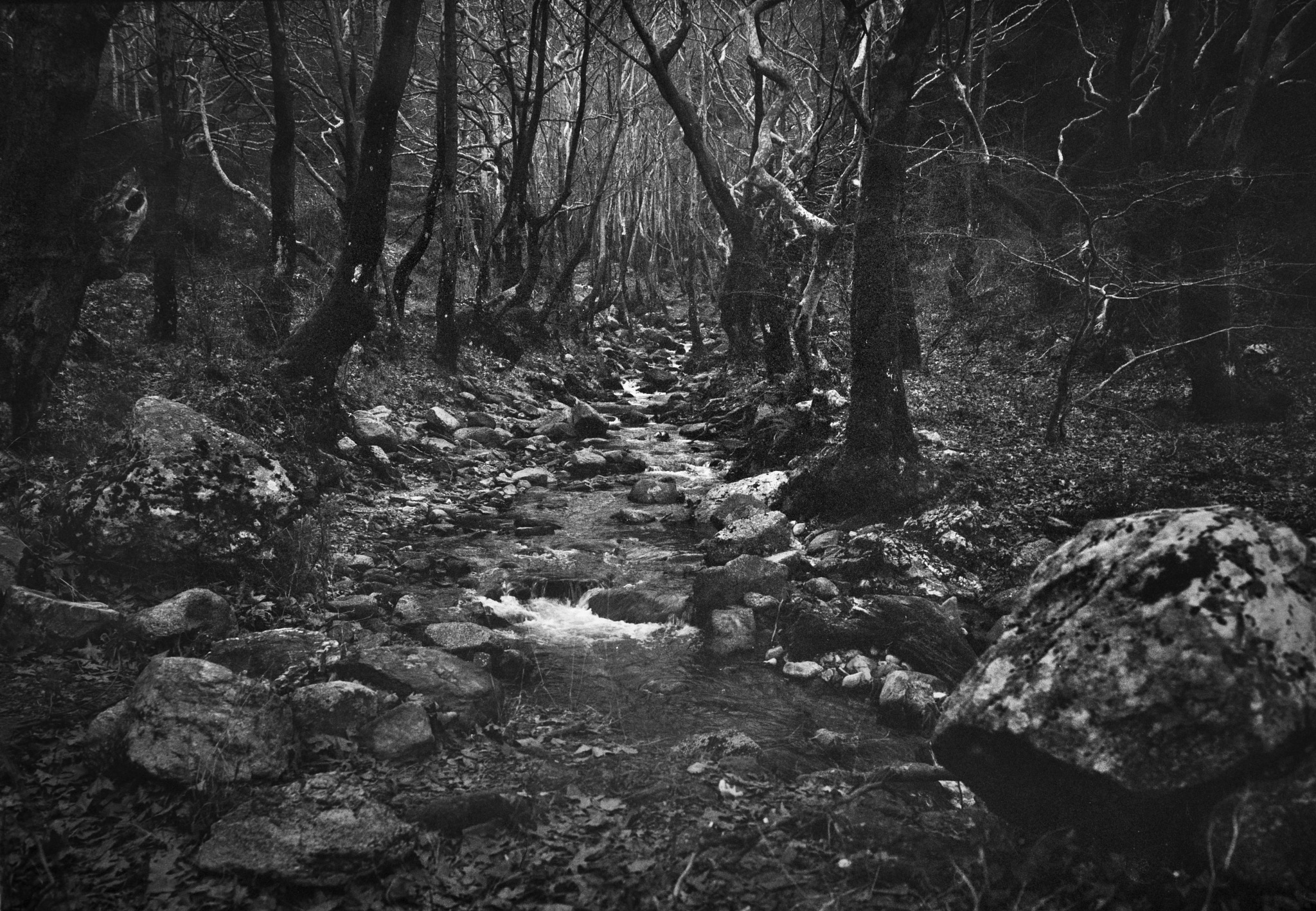 deep in the woods by Stathis Floros