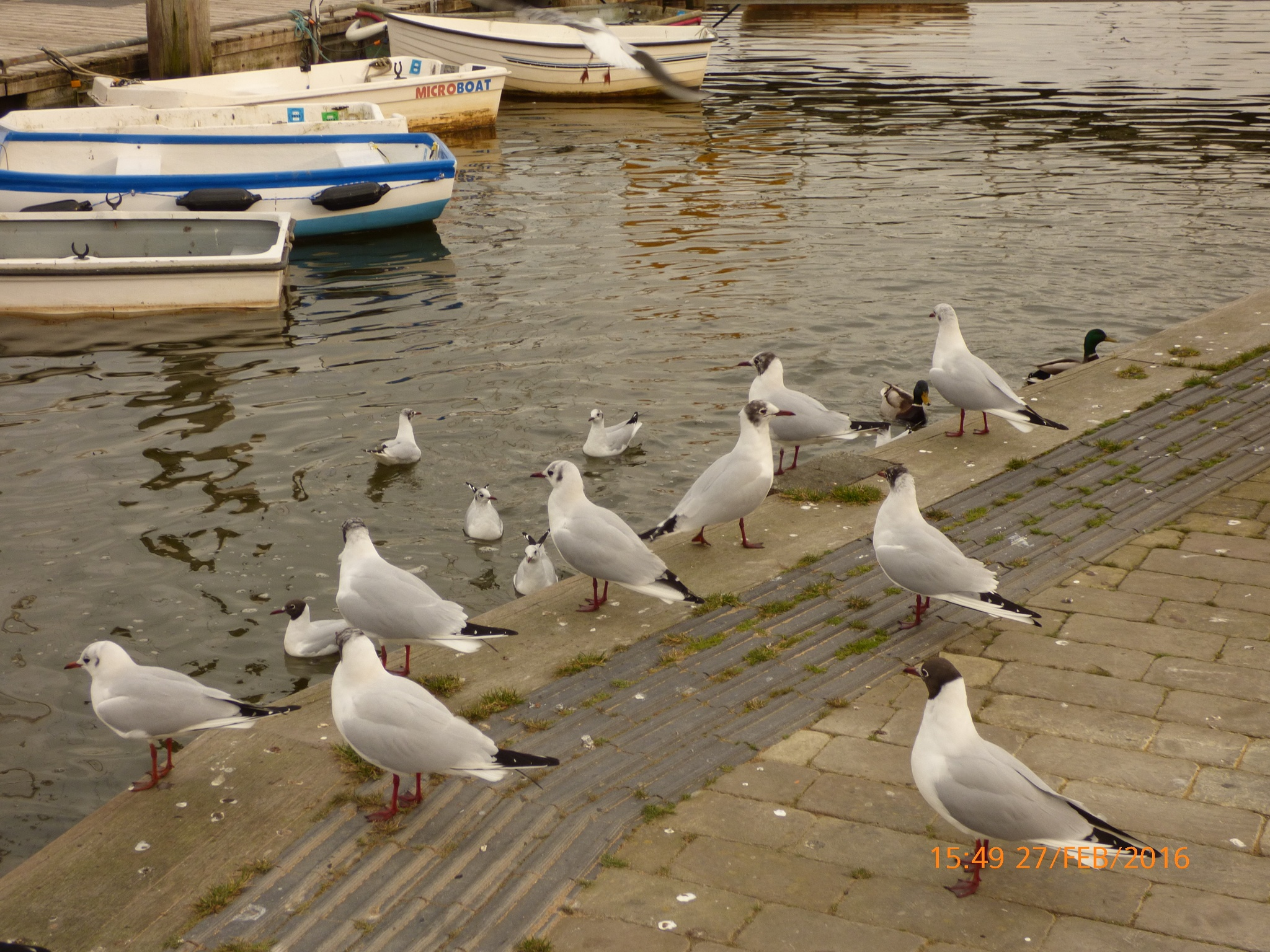 seagulls at the Quay  by chinaclowns2