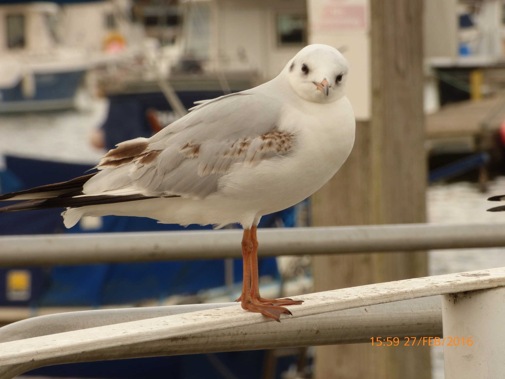 a seagull looking at me  by chinaclowns2