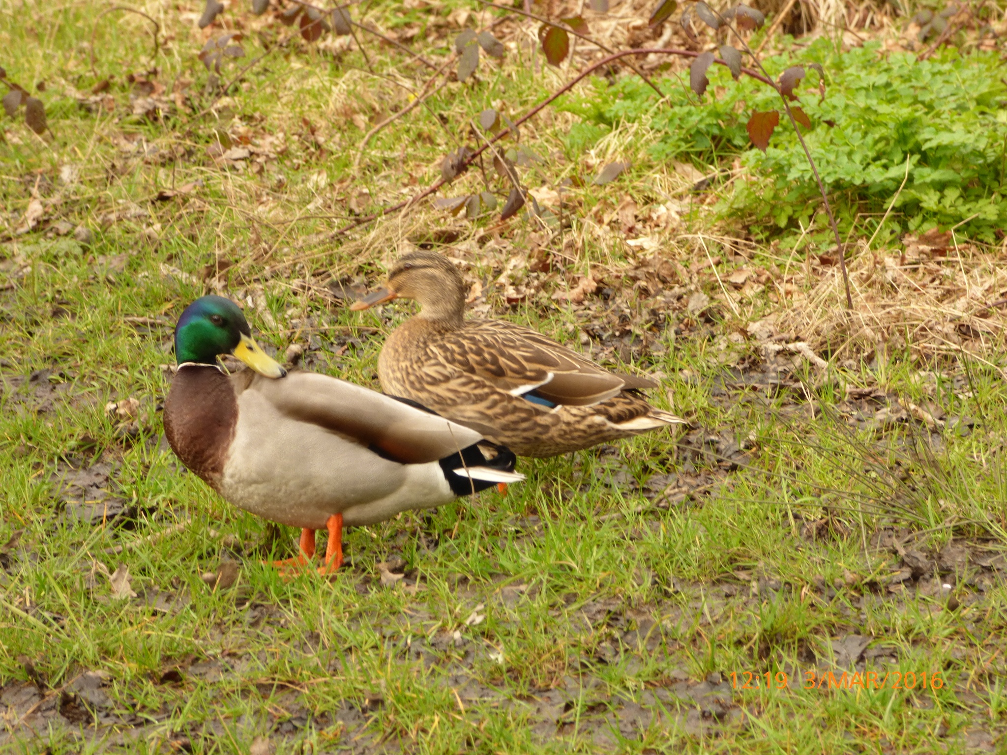 2 ducks  by chinaclowns2