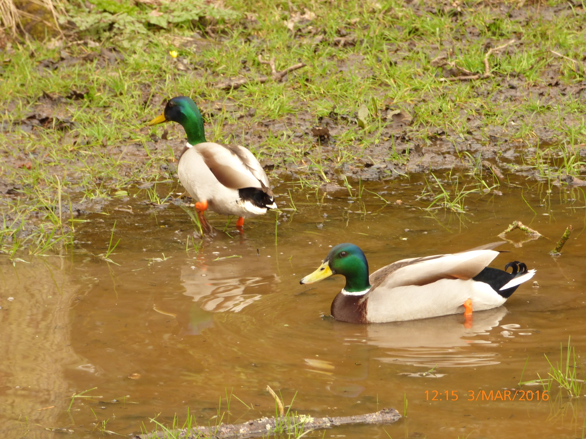 2 ducks having a nice day  by chinaclowns2