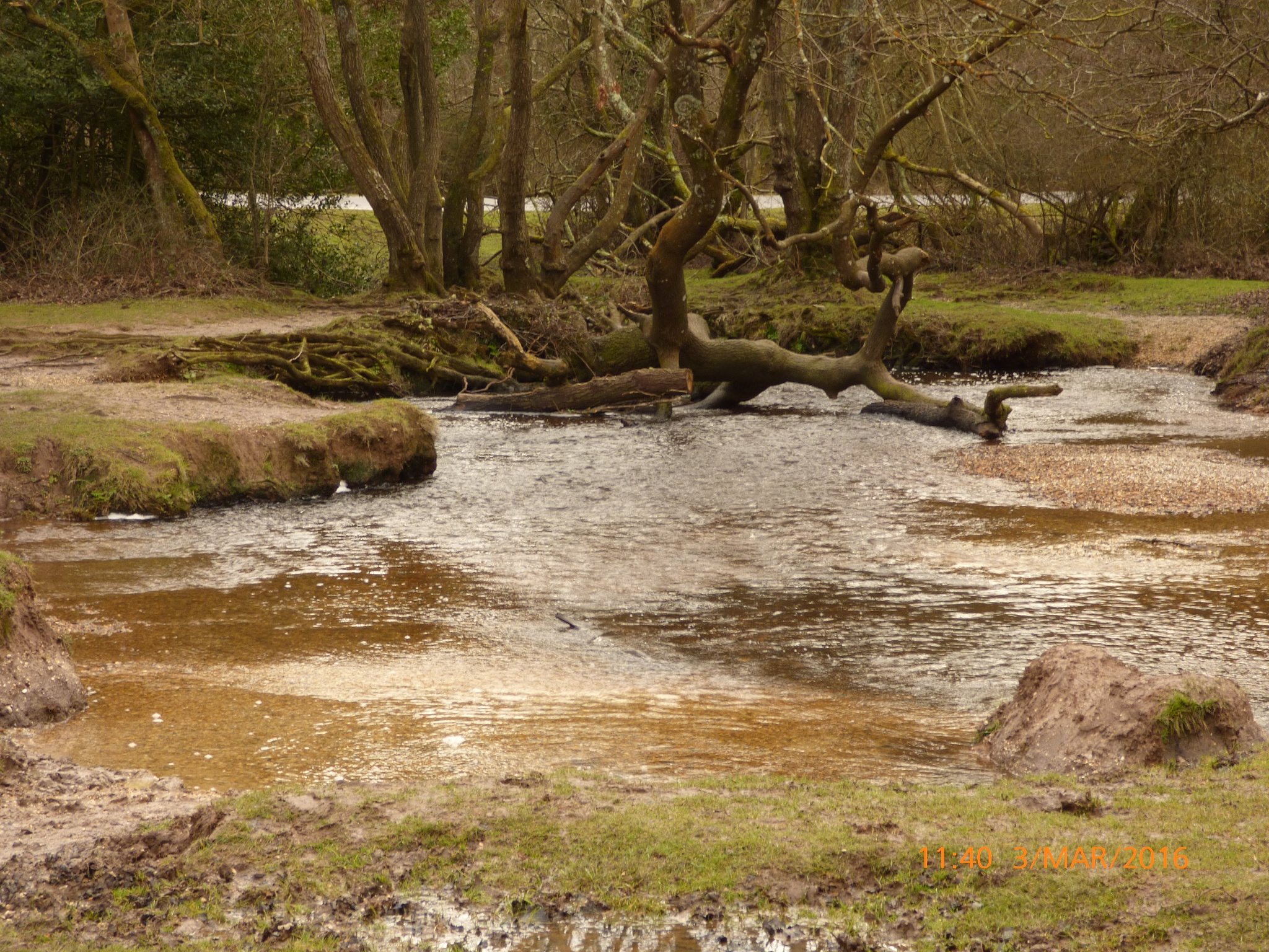 the stream in the New Forest  by chinaclowns2