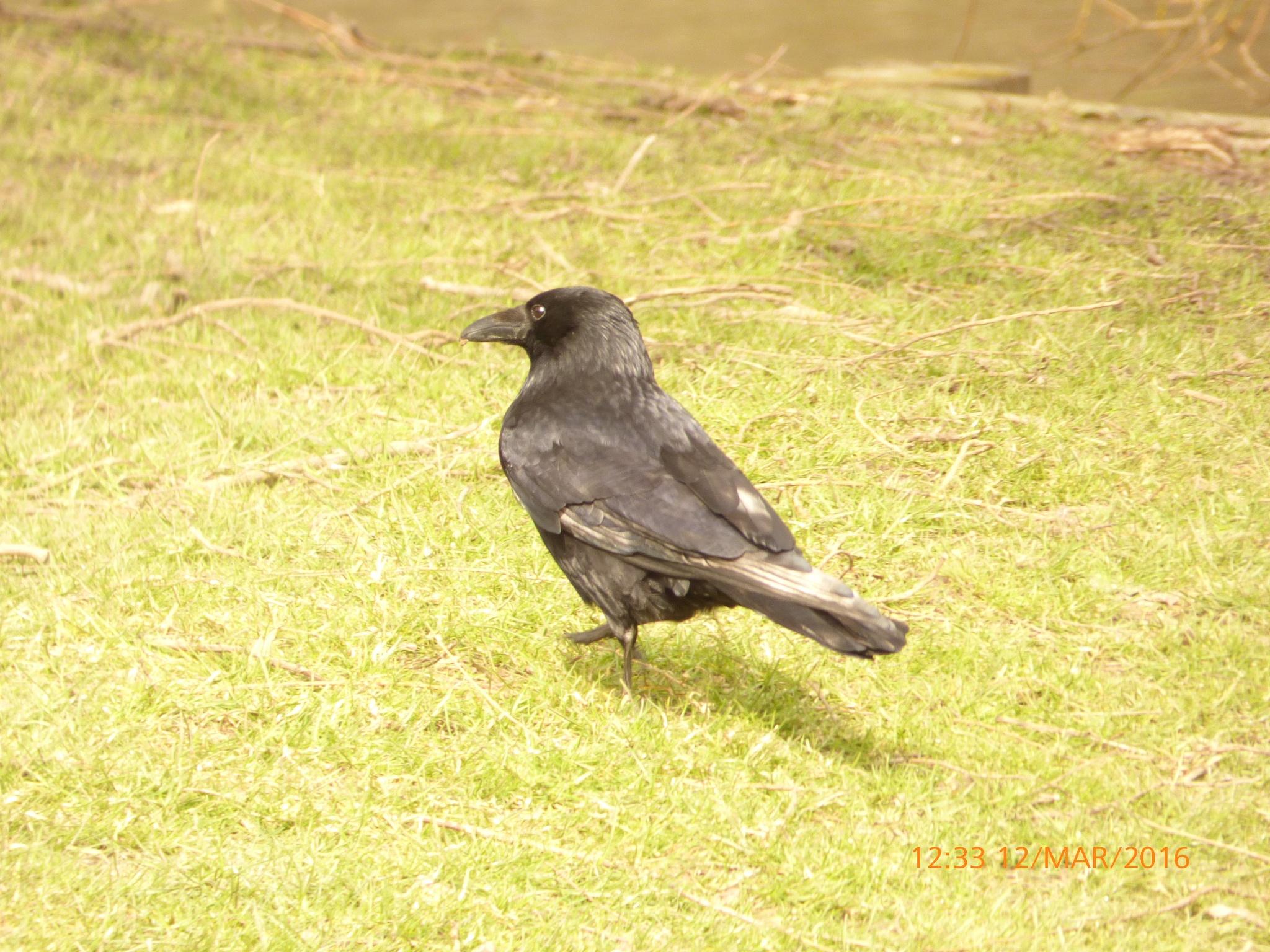 a bird by chinaclowns2