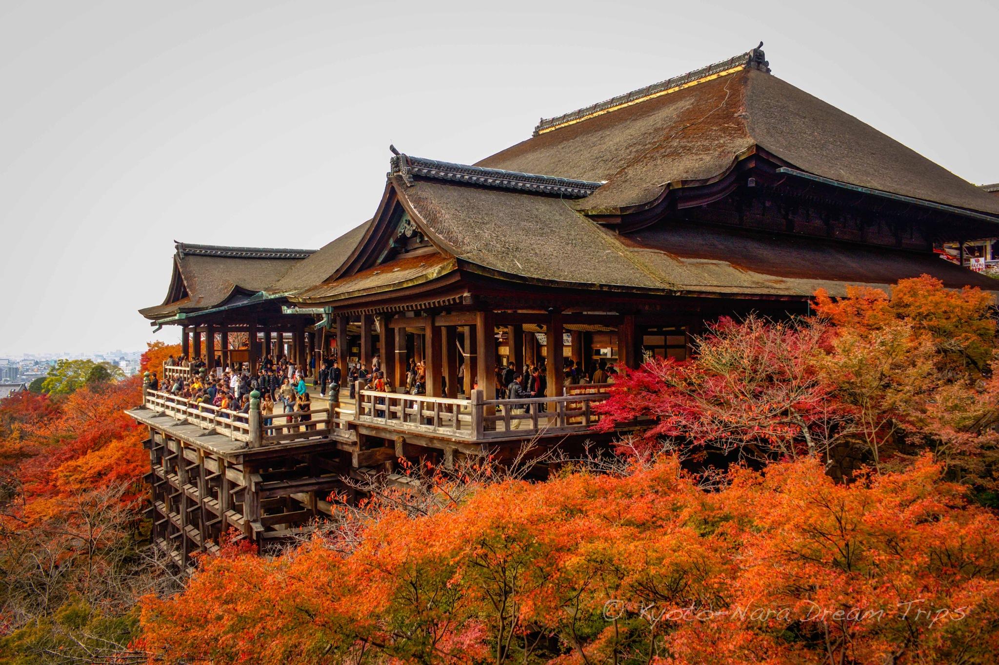 Kiyomizu Temple During the Autumn Season in Kyoto! by KyotoNaraDreamTrips