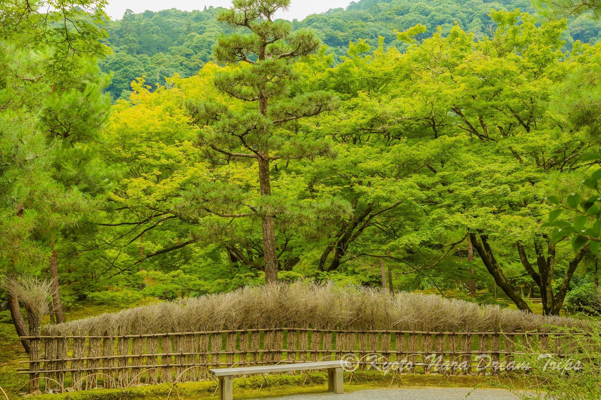 Lion's Roar Garden of Hōgon-in, Arashiyama-Kyoto. by KyotoNaraDreamTrips