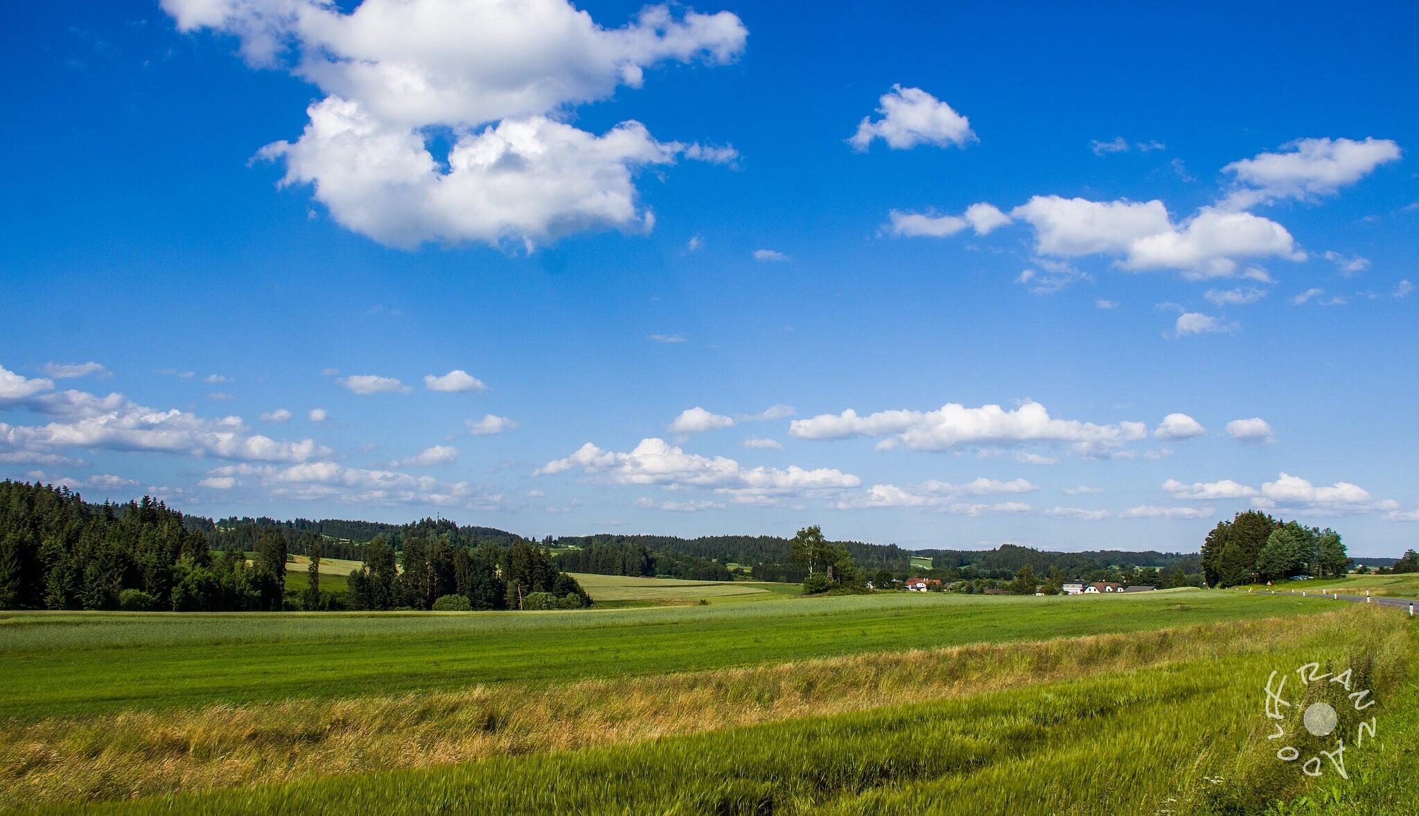Green green grass ... by Franzl