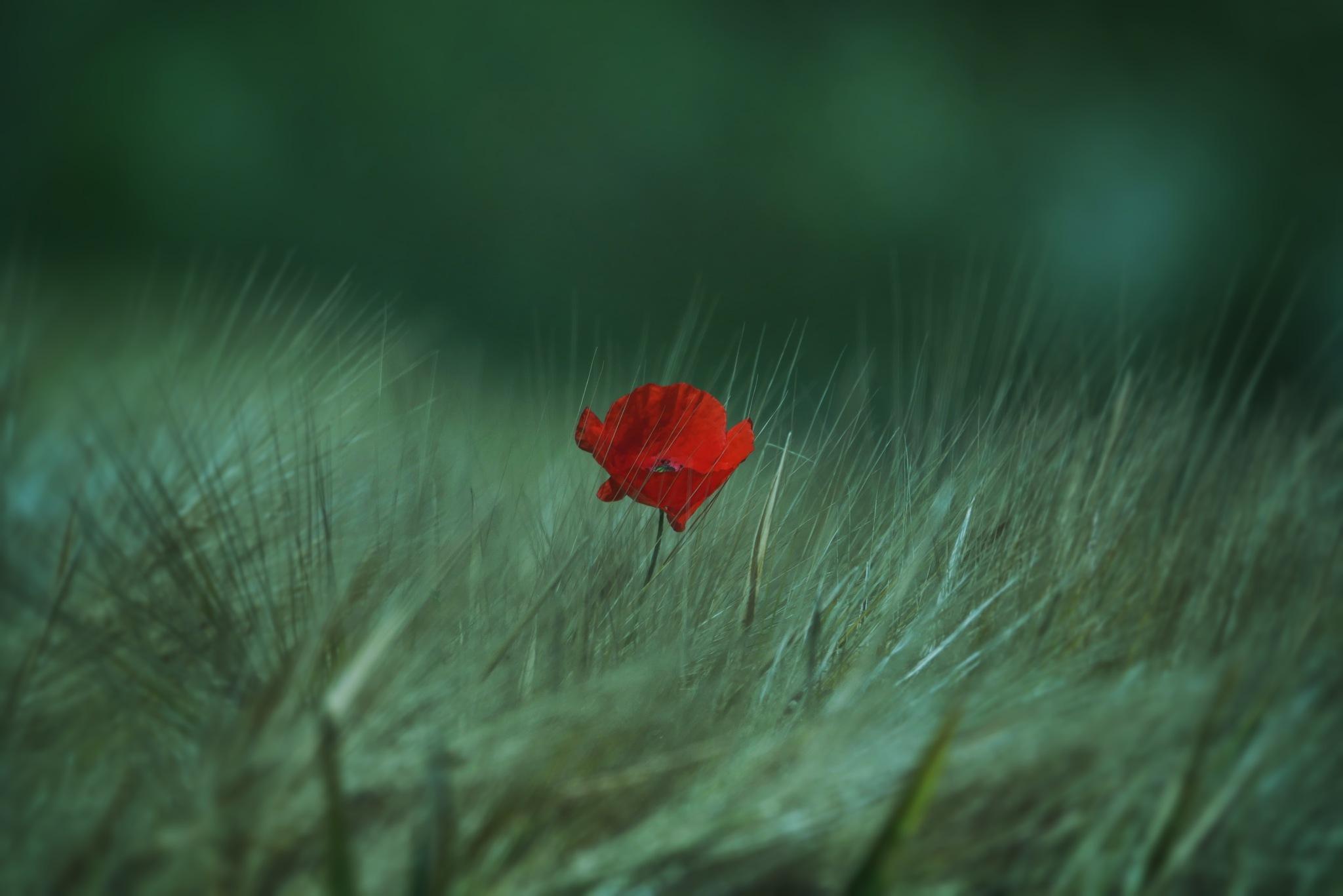 Alone....... by StefanJansen