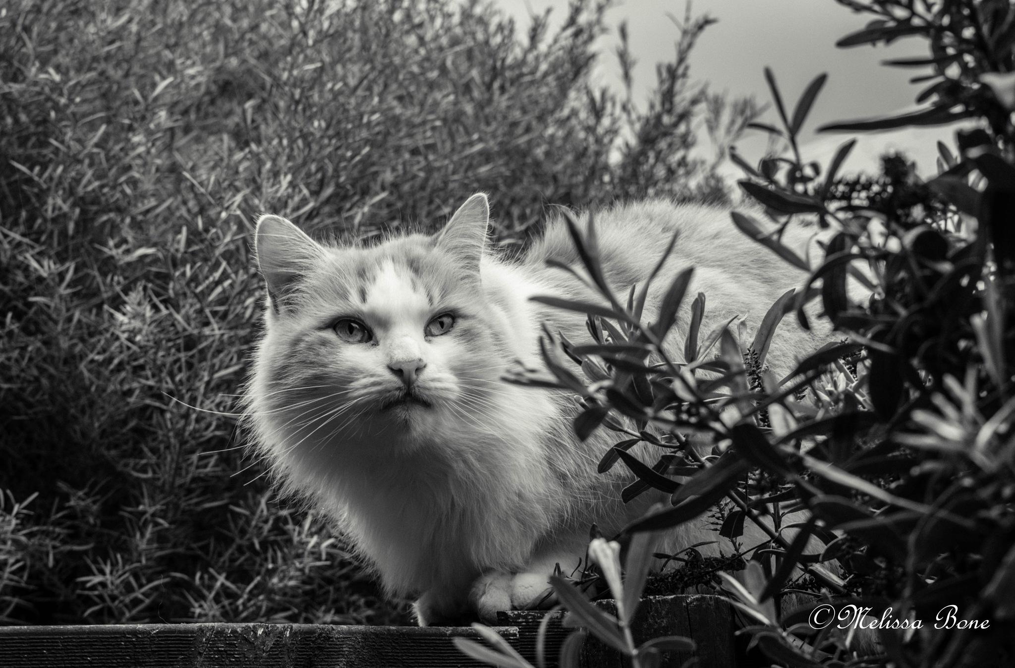 My Toby by Melissa Bone
