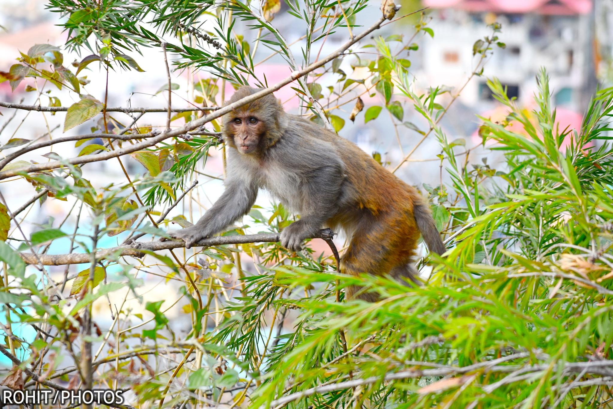 Animal photography by kohitkumar