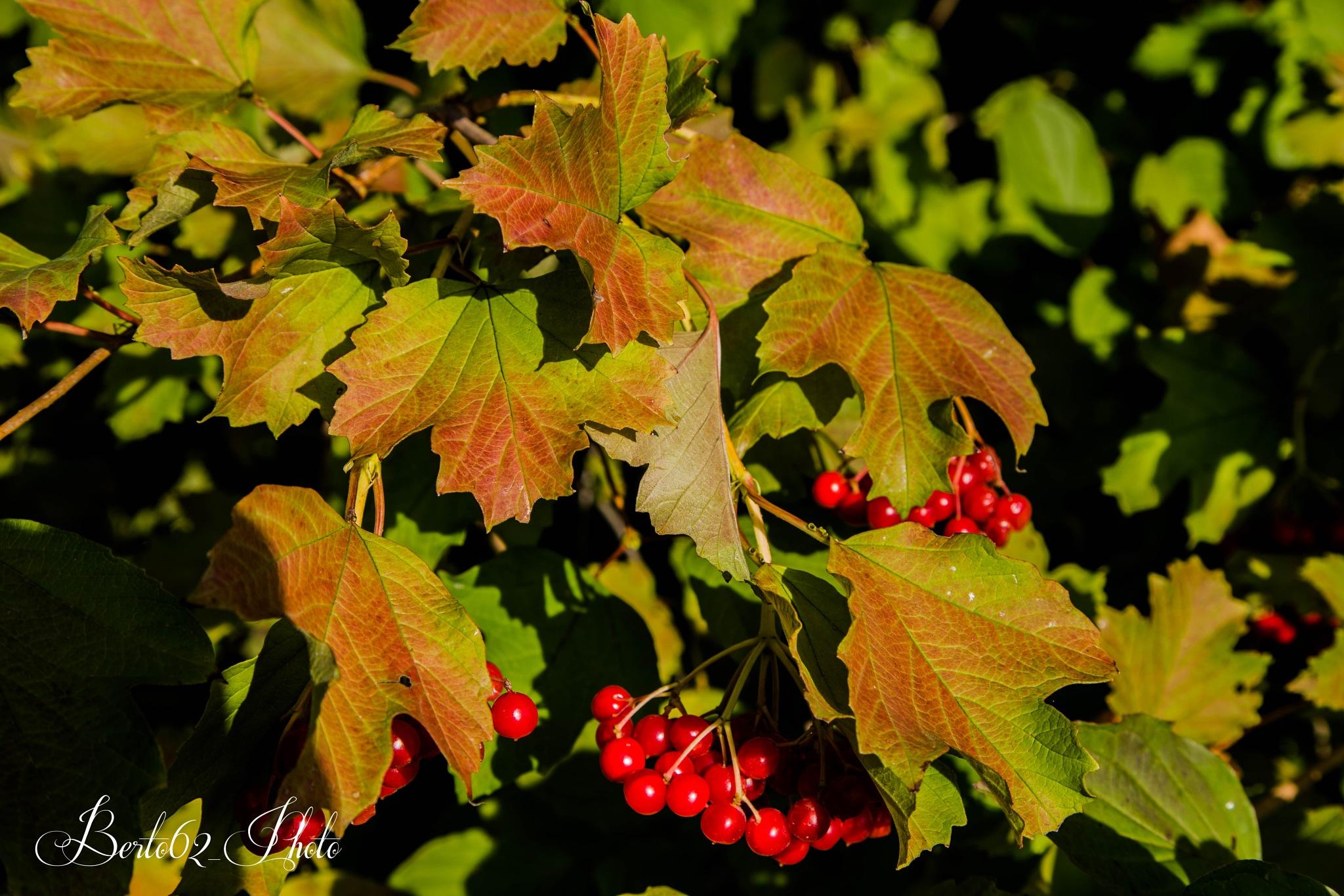 Autumn colors by Bartolomeo Scanu