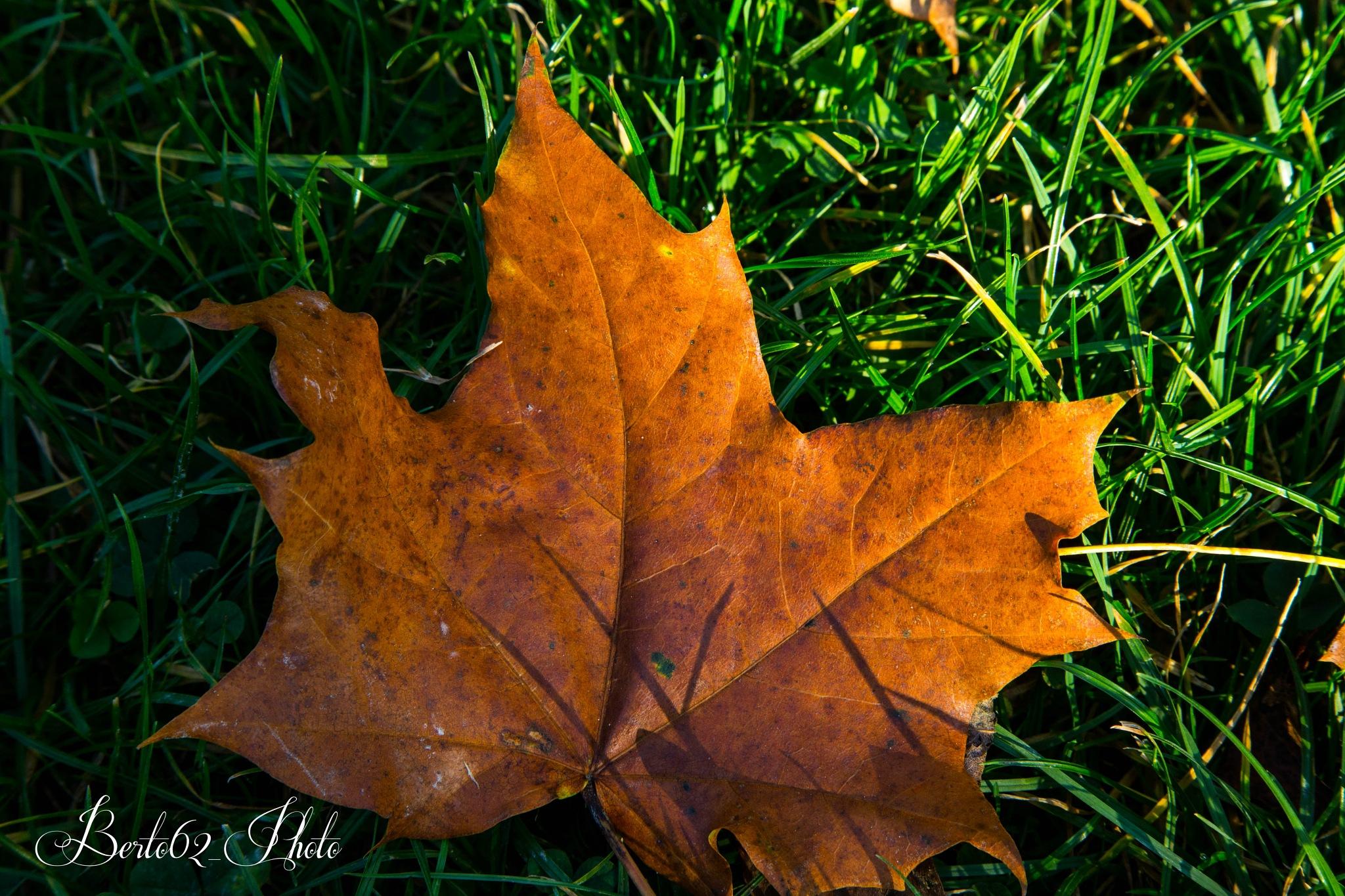 Autumn  by Bartolomeo Scanu