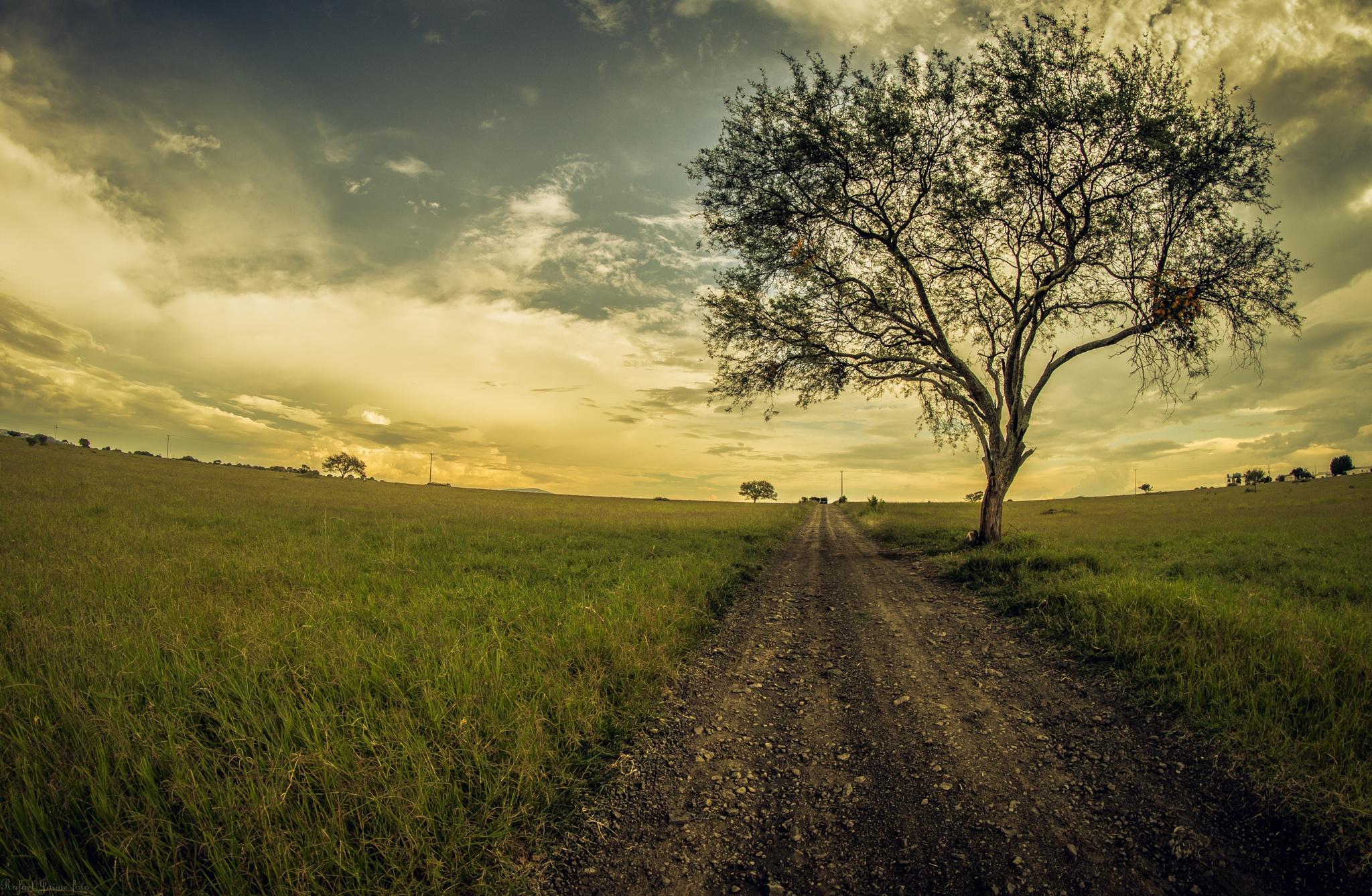 Camino aventura by Rafael Jaime