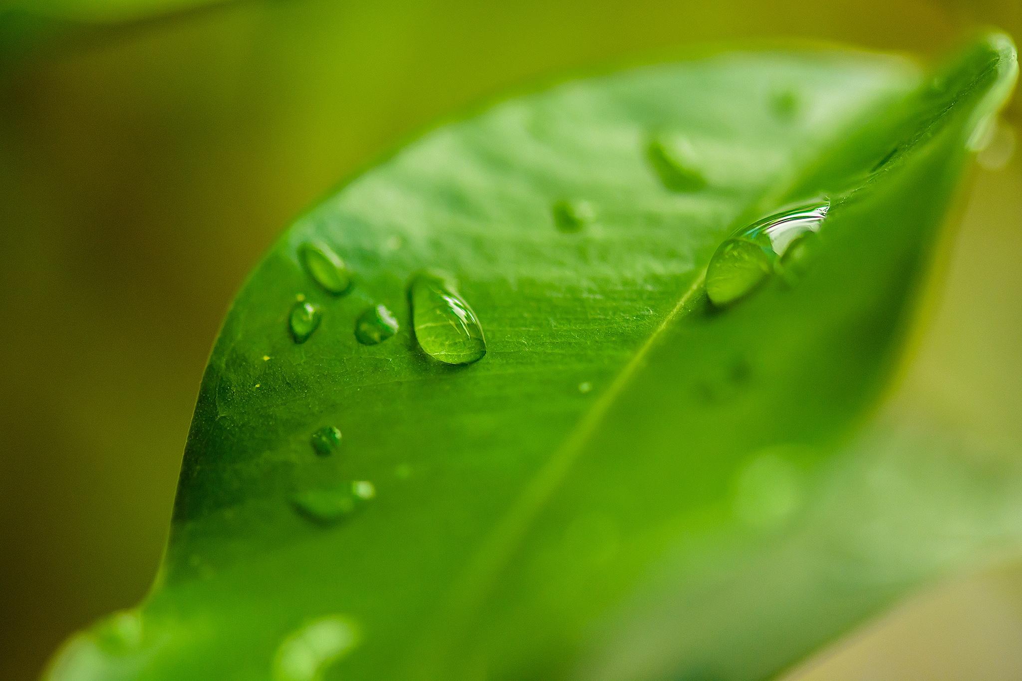 Water drops by Nicolas Salvo