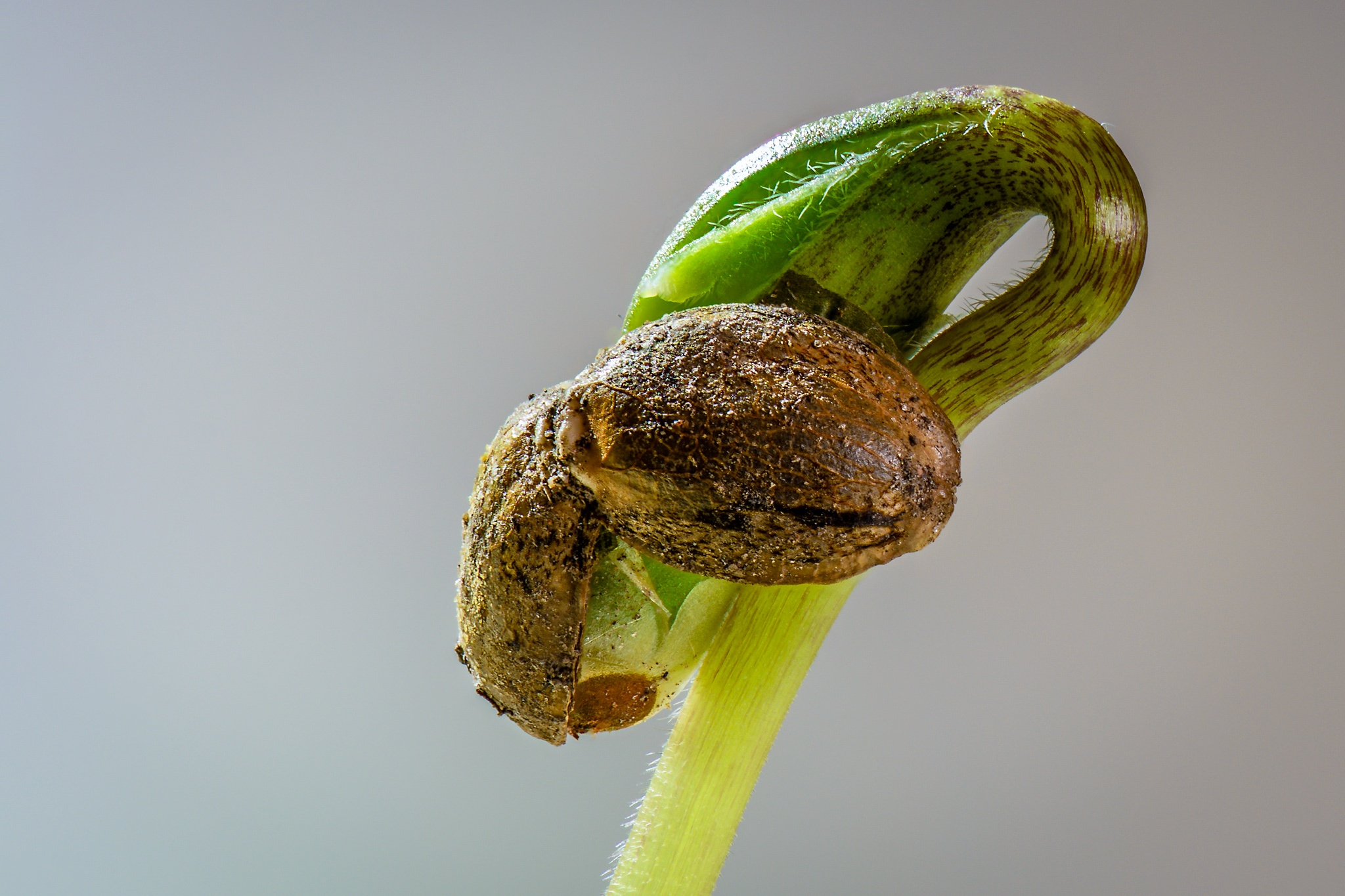 Photo in Macro #macro #seed #semilla #growing #creciendo #green #verde #tallo