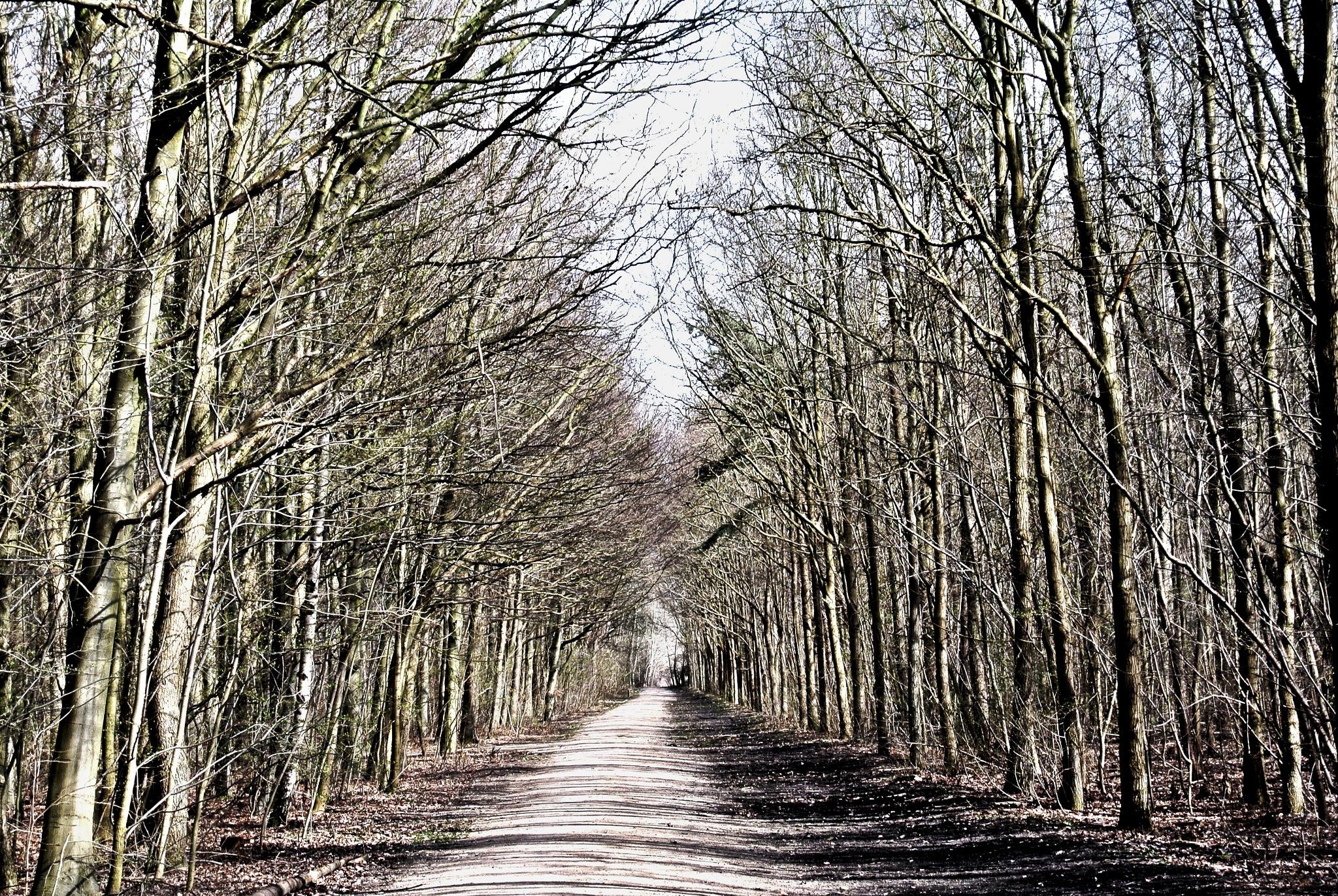 Path by kulefe31