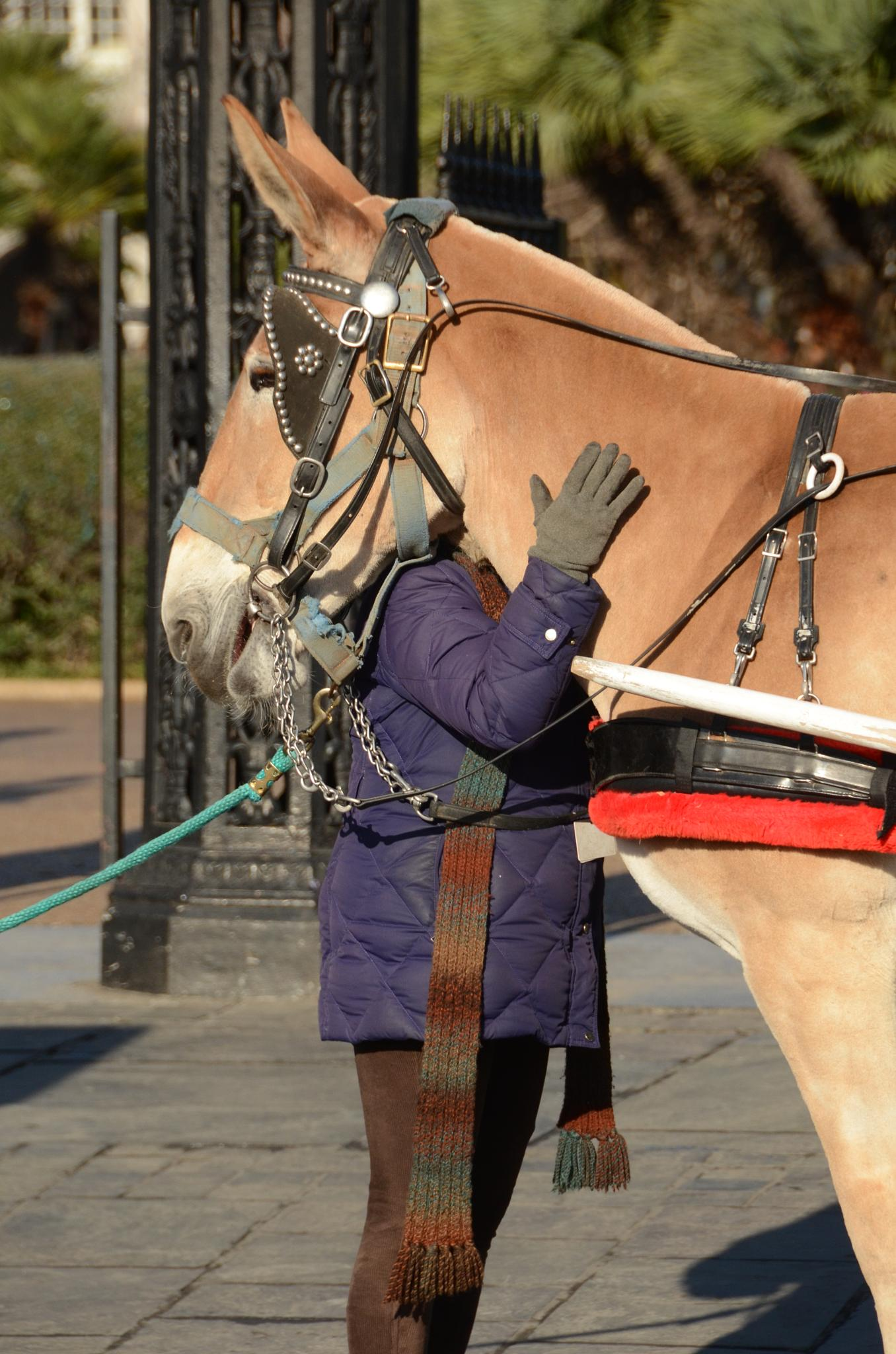 Have You Hugged your Mule today? by Elizabeth
