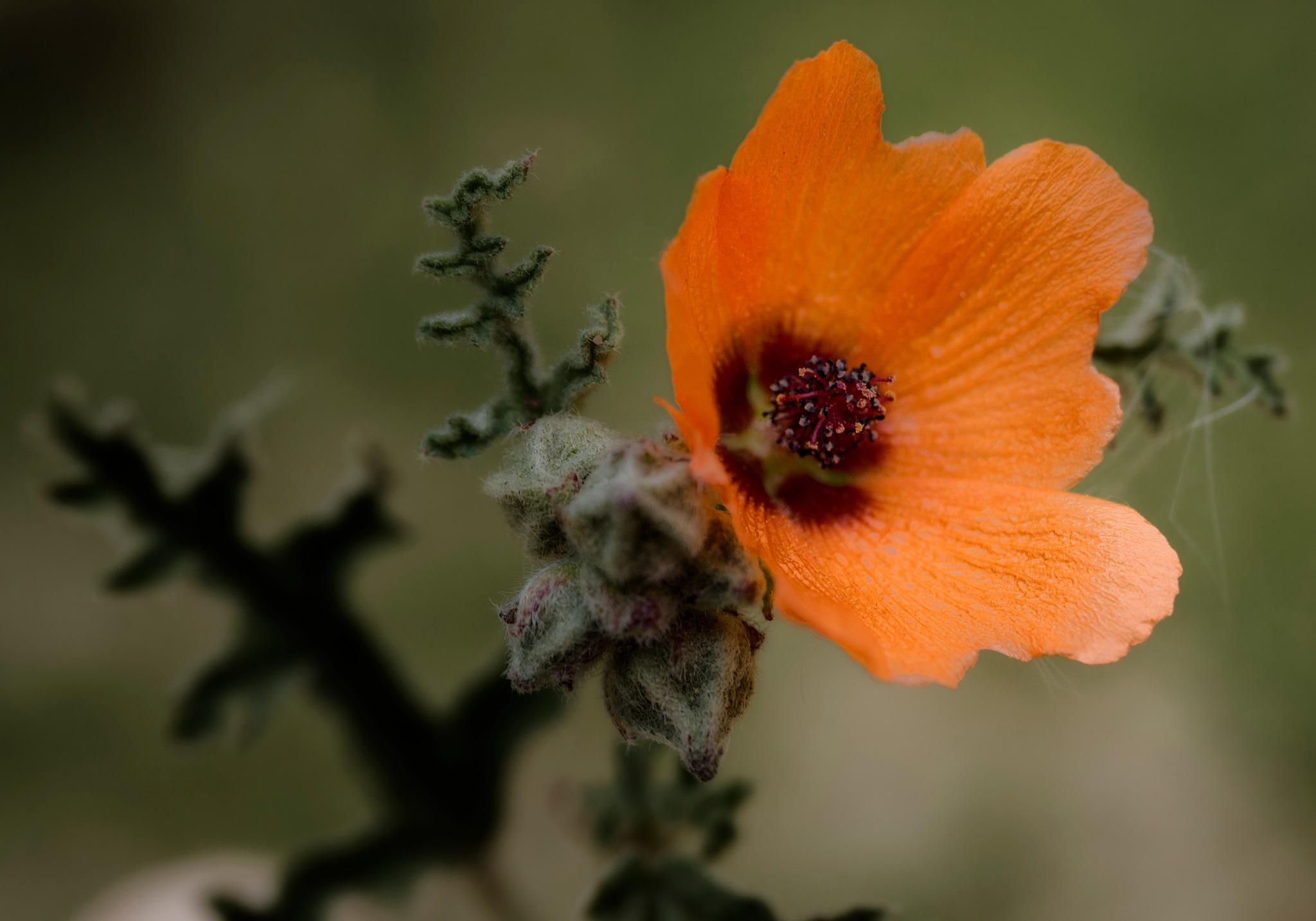 Orange by Manlake Gabriel