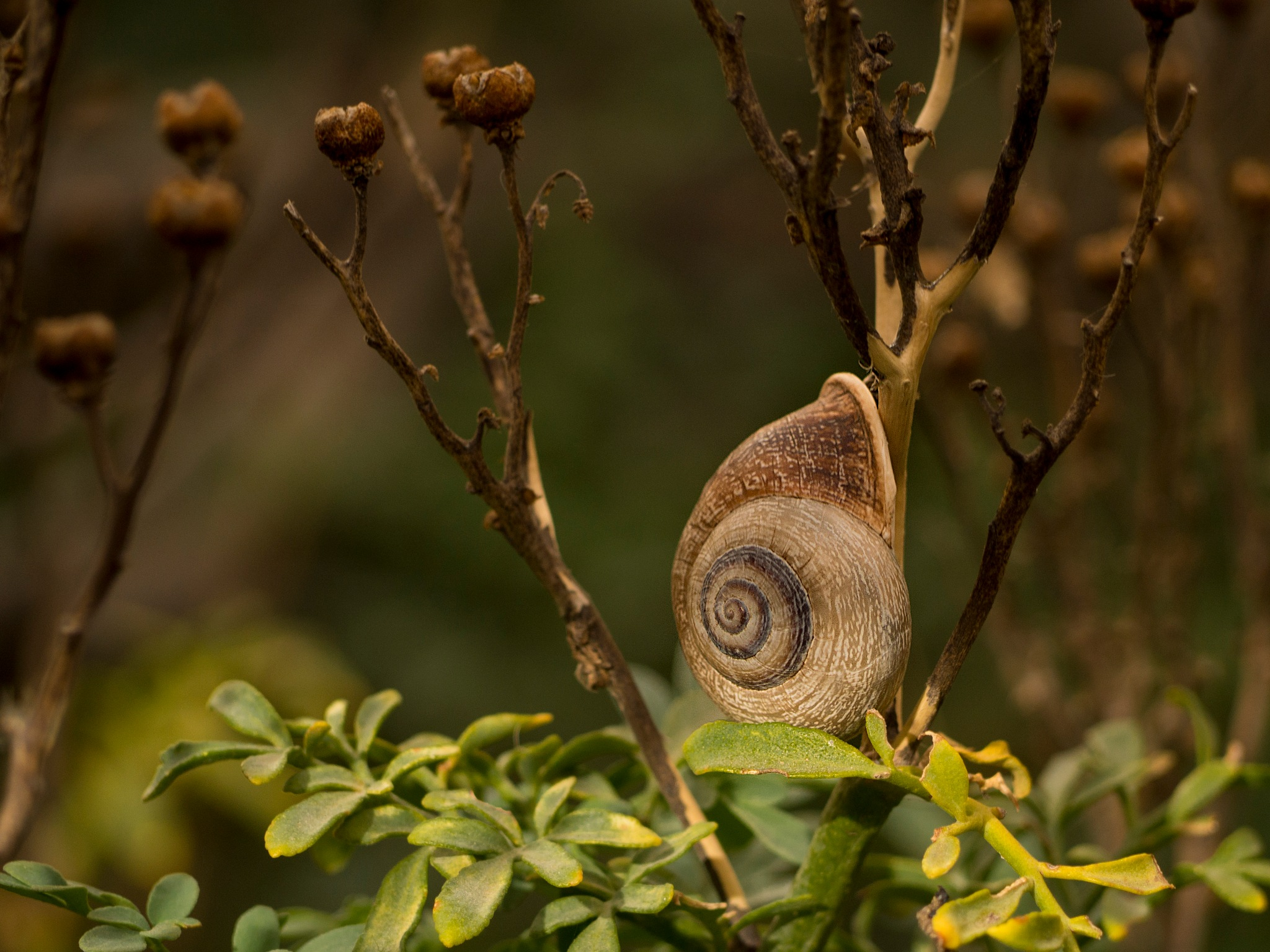 Snail by Manlake Gabriel