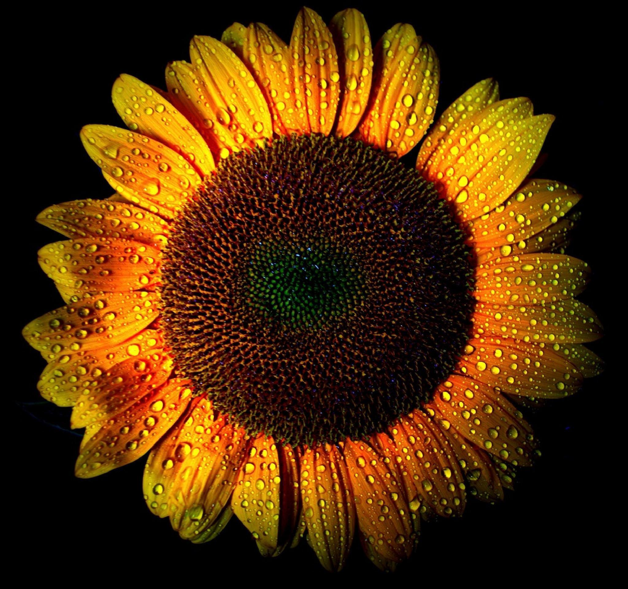 Sun  by LoredanaLocci
