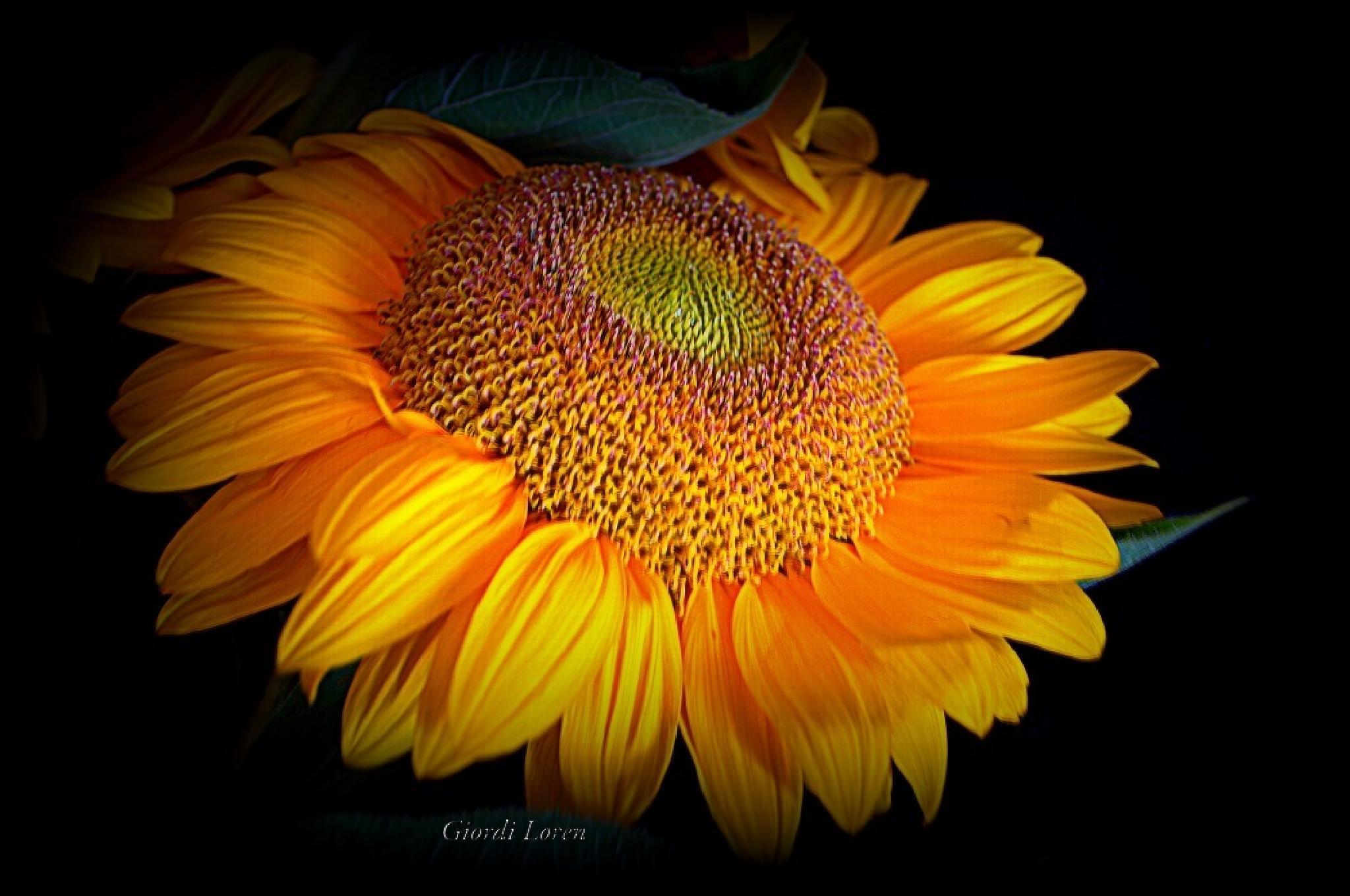 Photo in Macro #sole #fiore #due