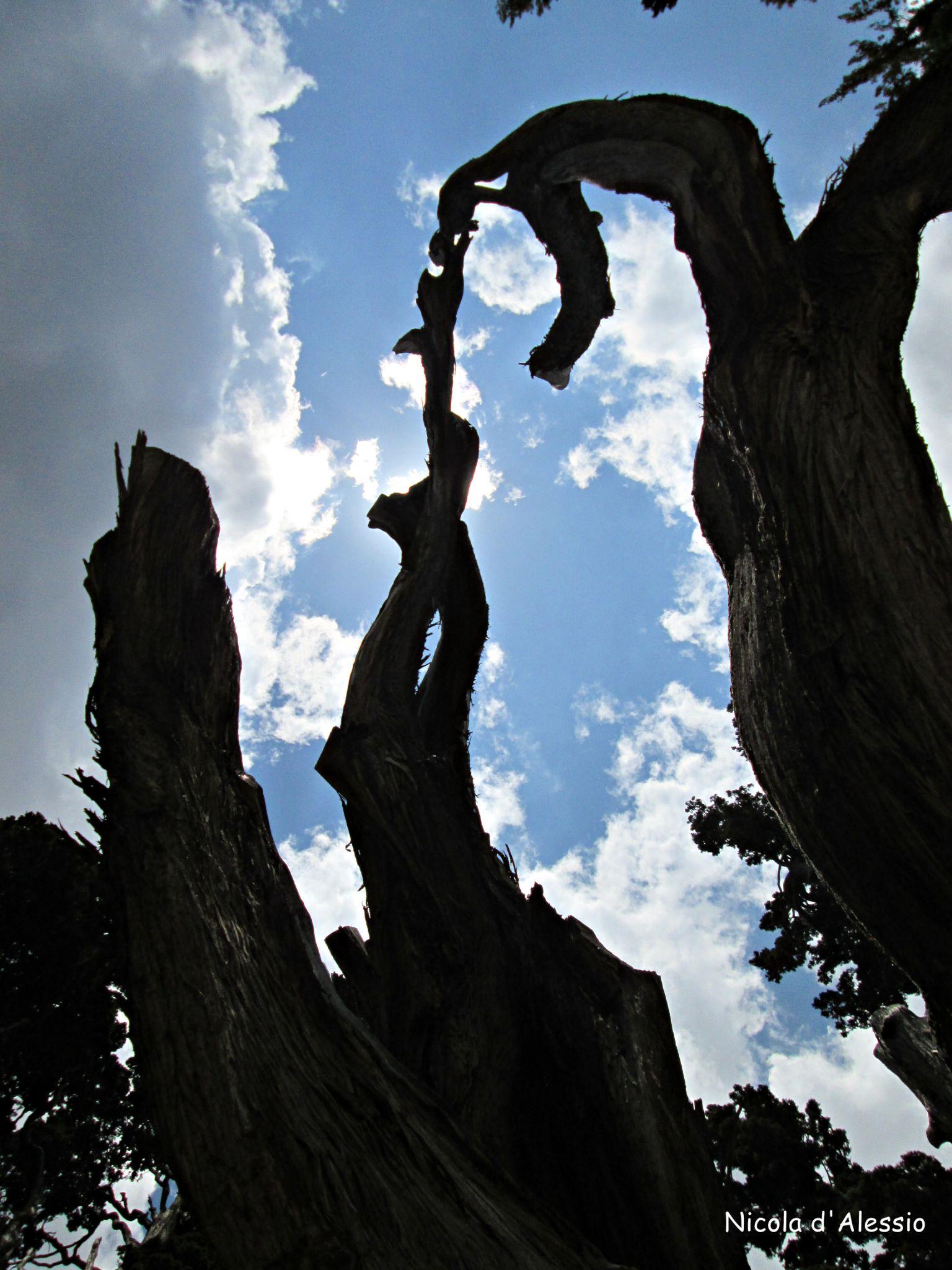 natura morta by dalessionicola