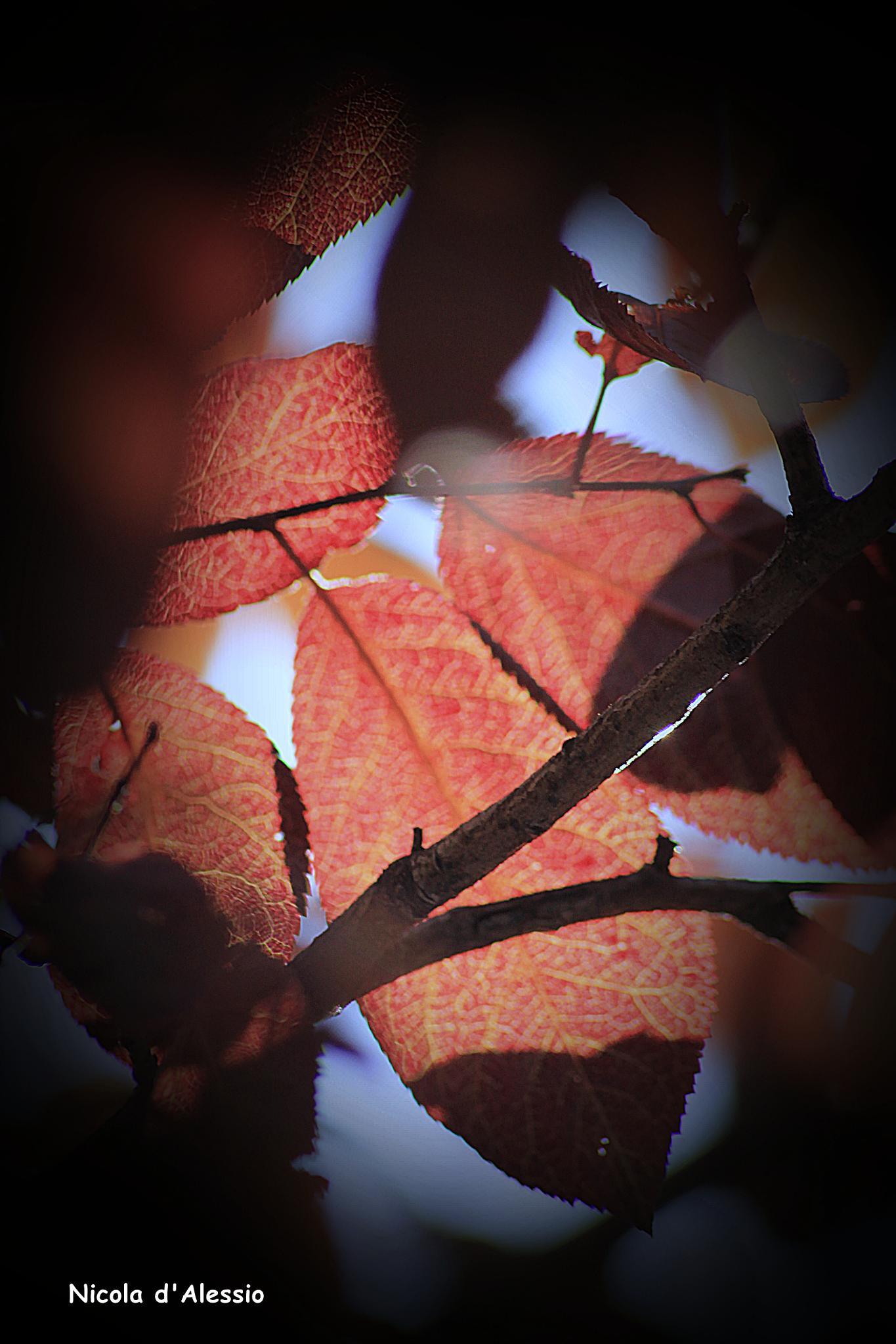 ottobre by dalessionicola