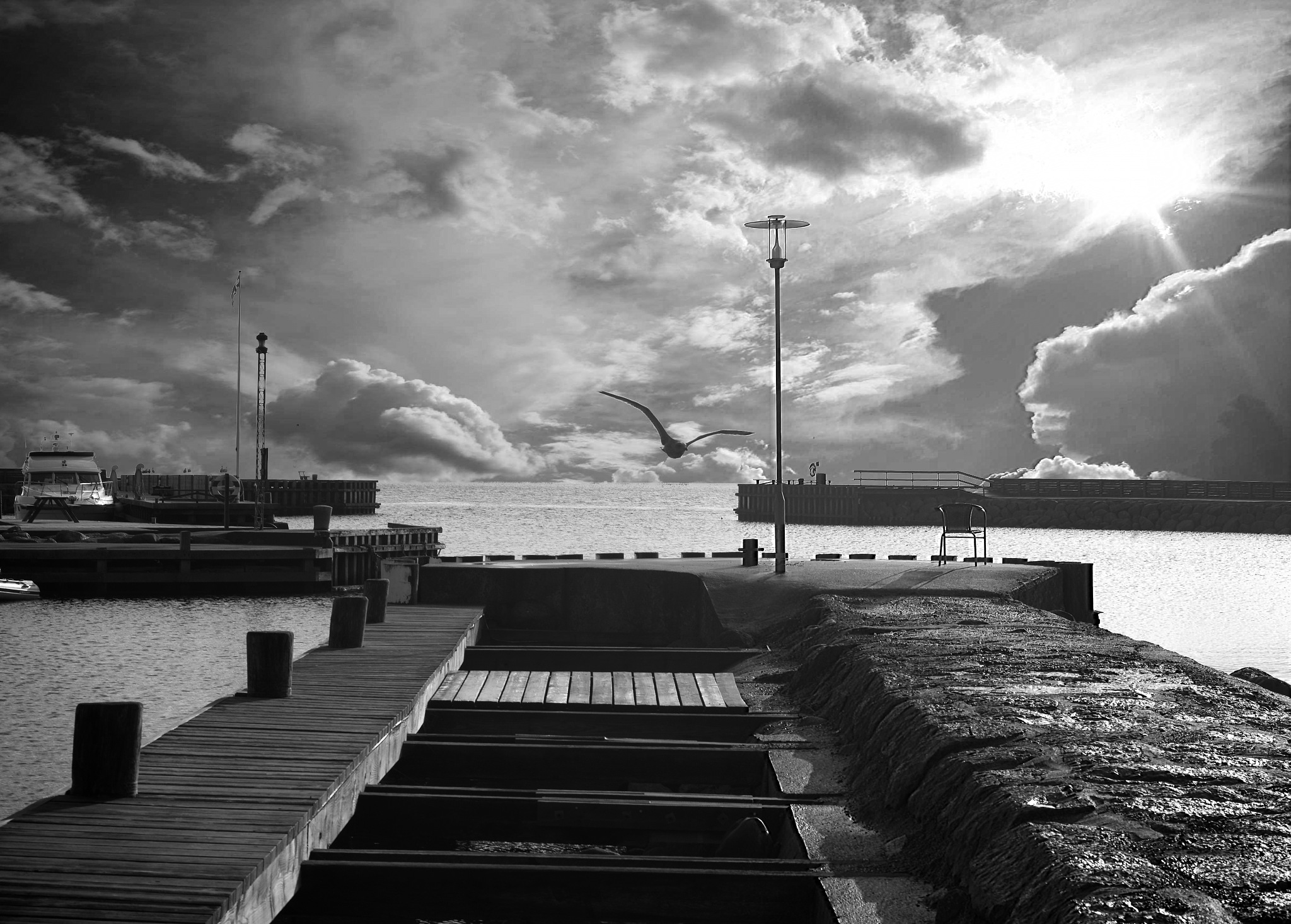 Bird at the harbour by Black cat photography