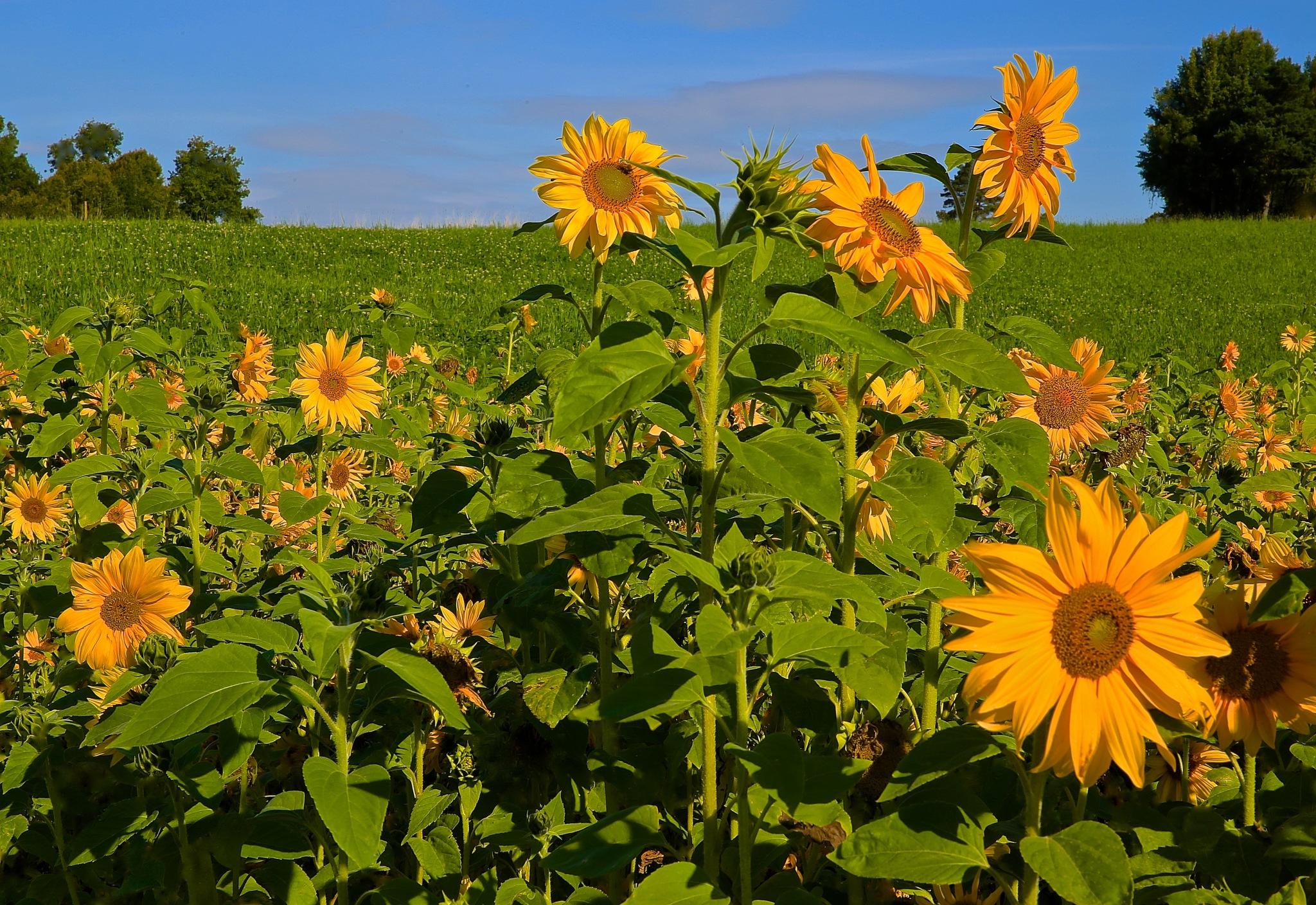 Happy flowers by Bildmartin