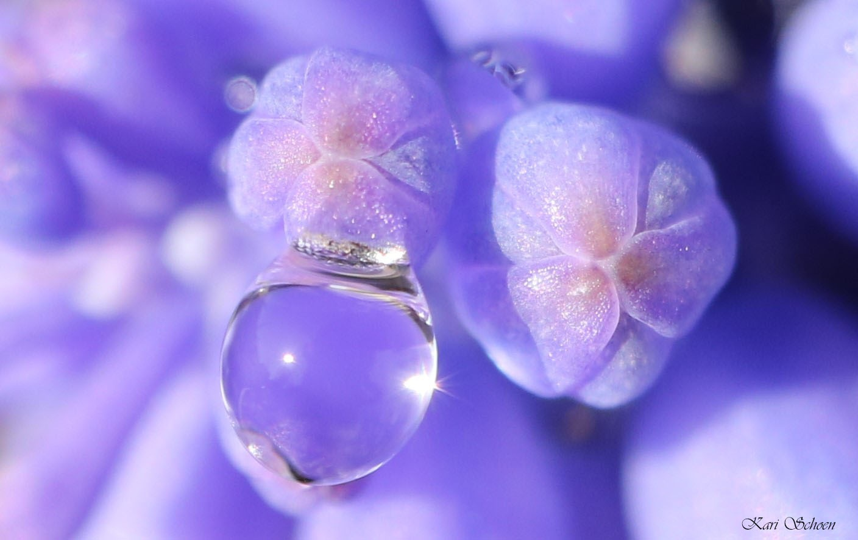 Tiny Bubbles by Kari