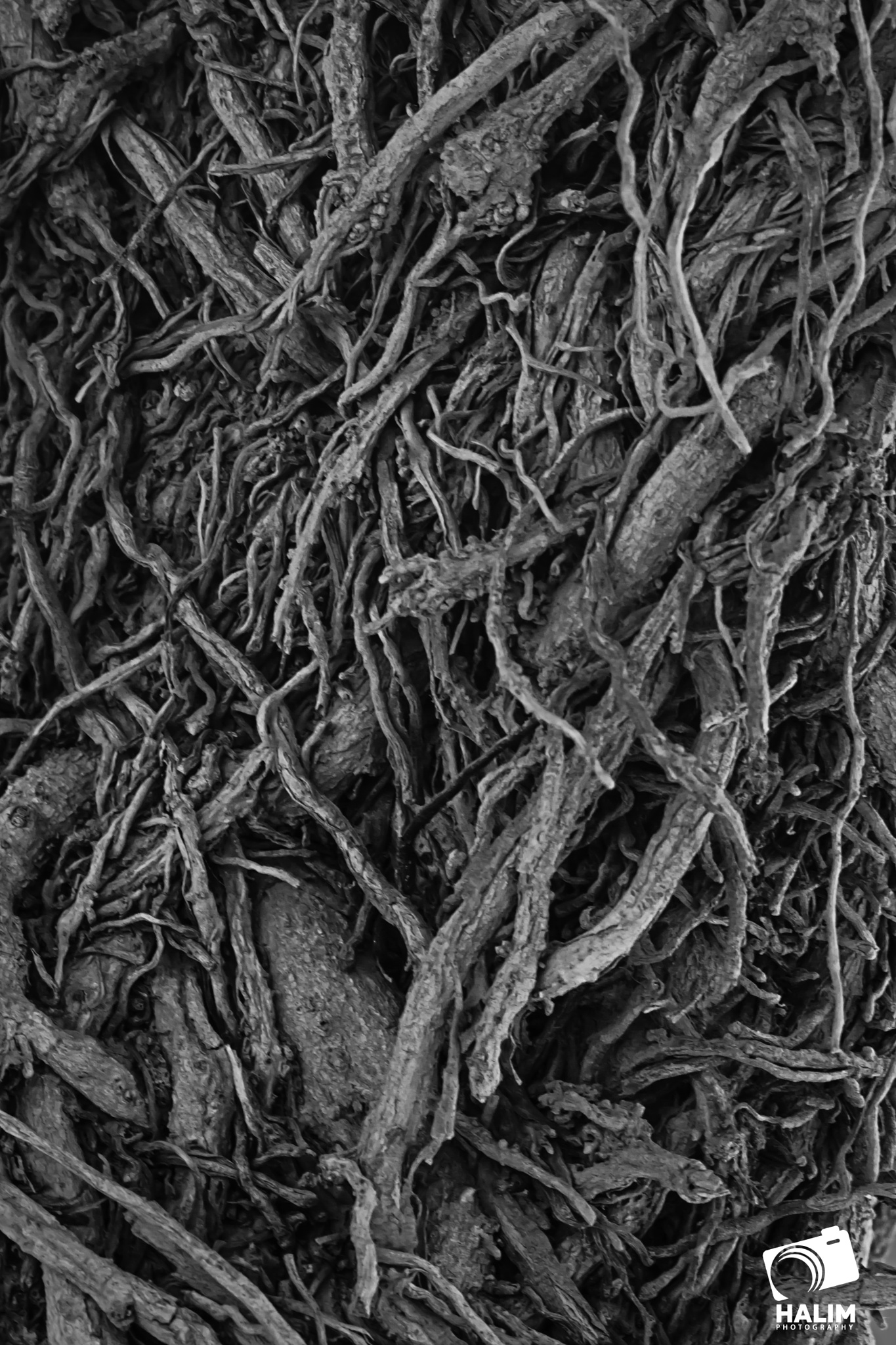 tree by HALIM