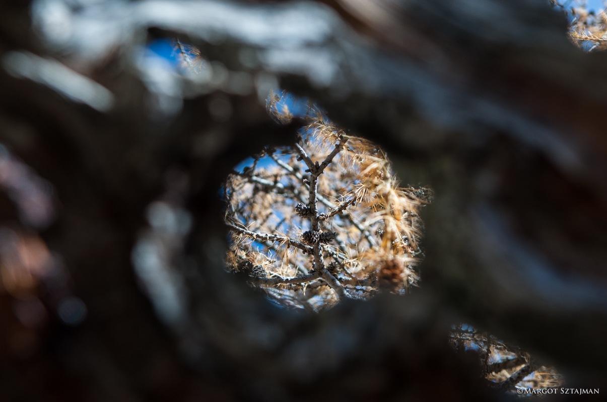 Window of Fall by Margot Sztajman