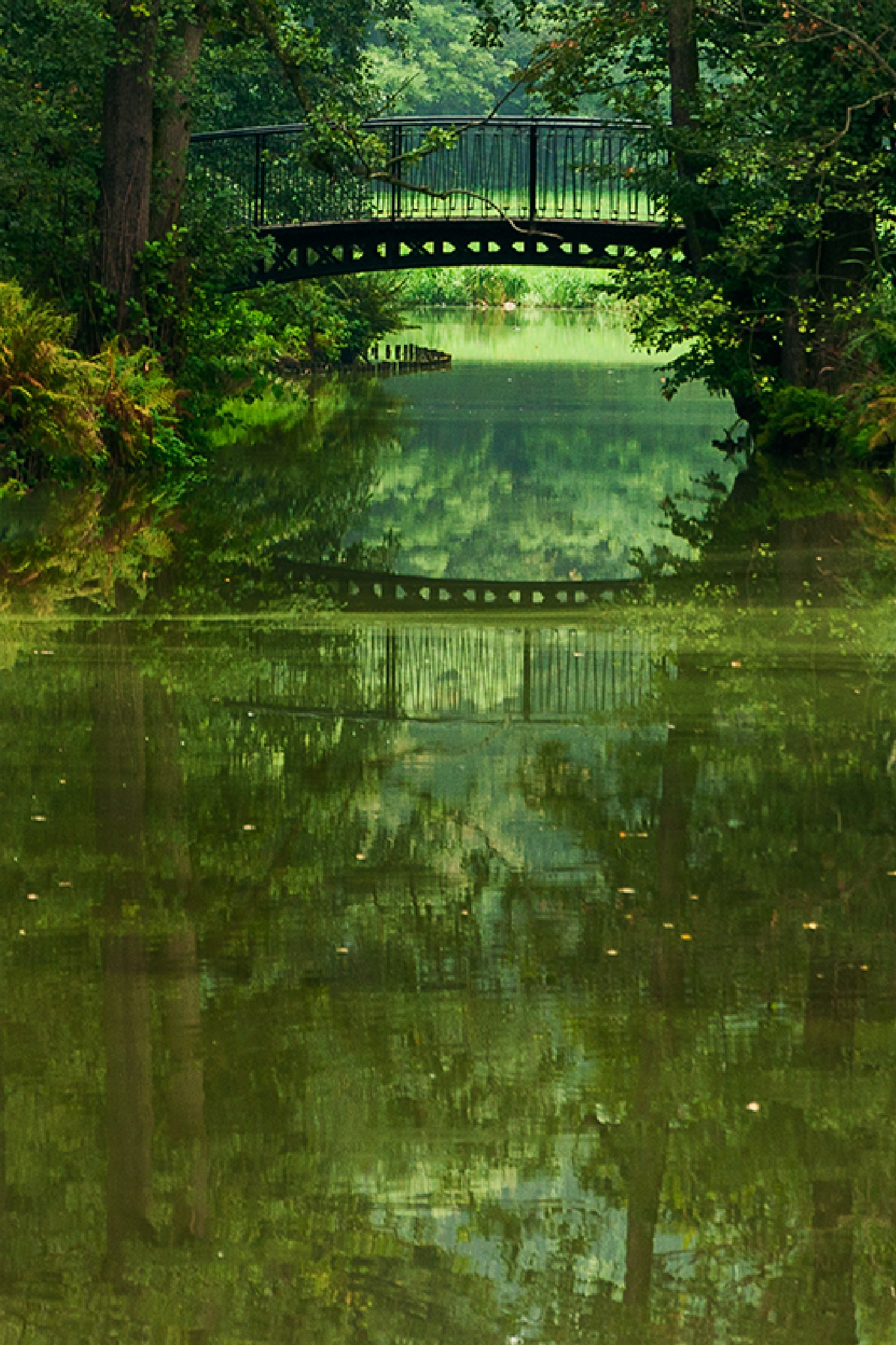 Park w Pszczynie by Zbigniew Gałucki