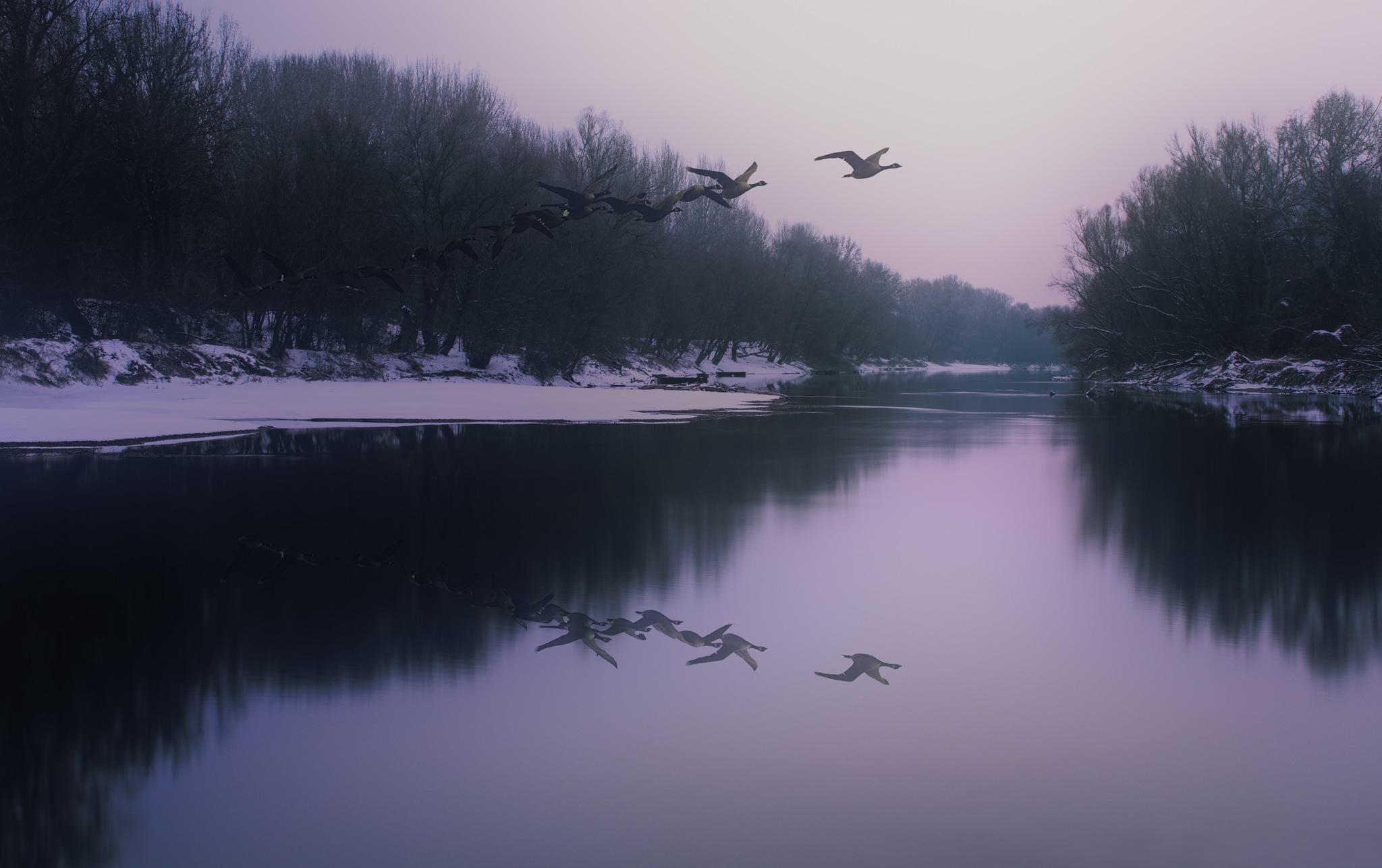 Wild goose run by pibacsi