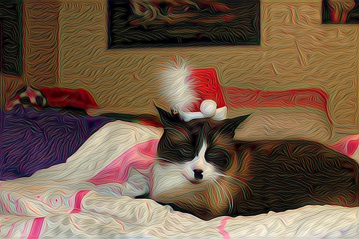 The cat in the hat was no jolly old soul by David  Lanteigne