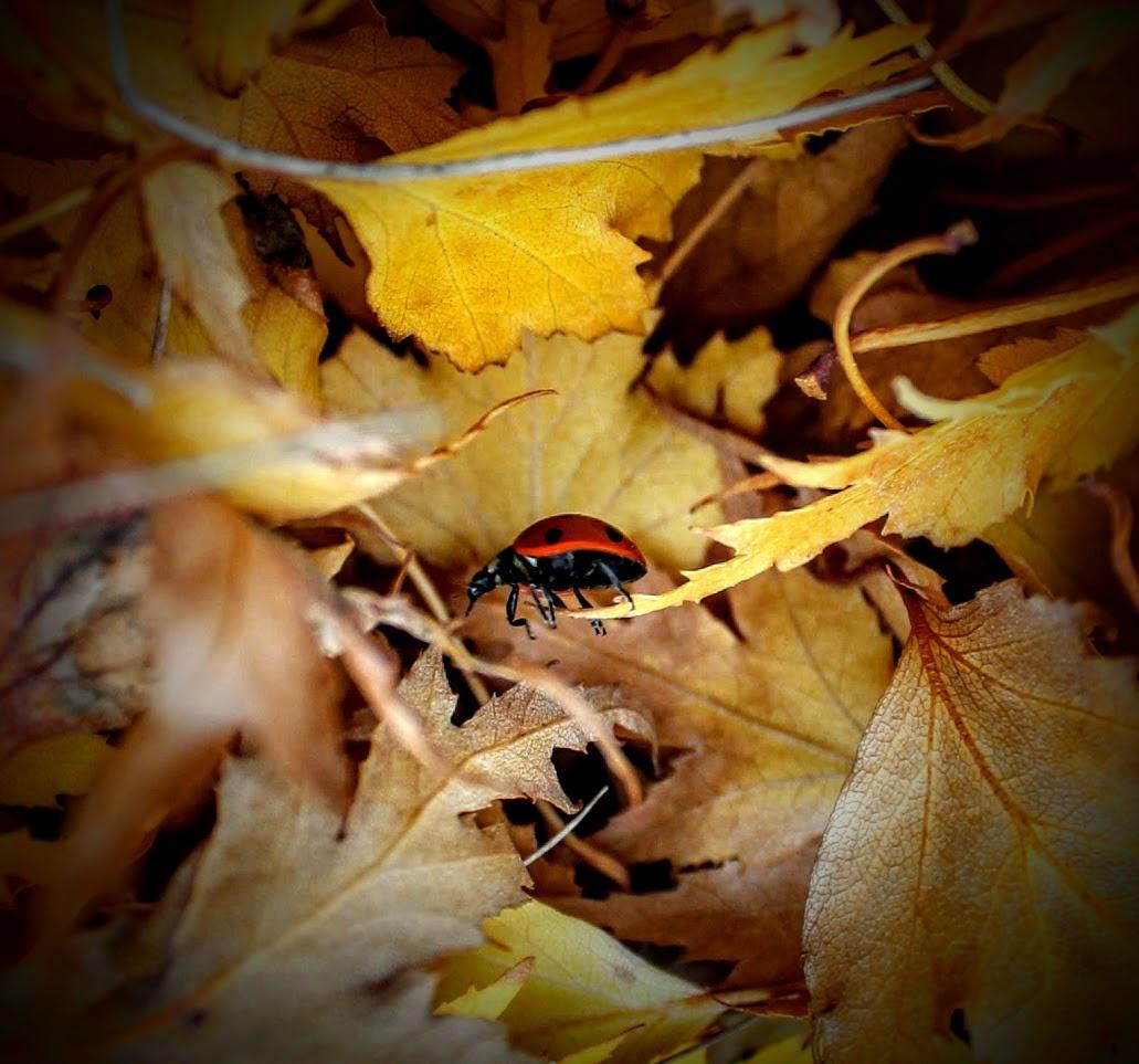 Ladie Bug by David  Lanteigne