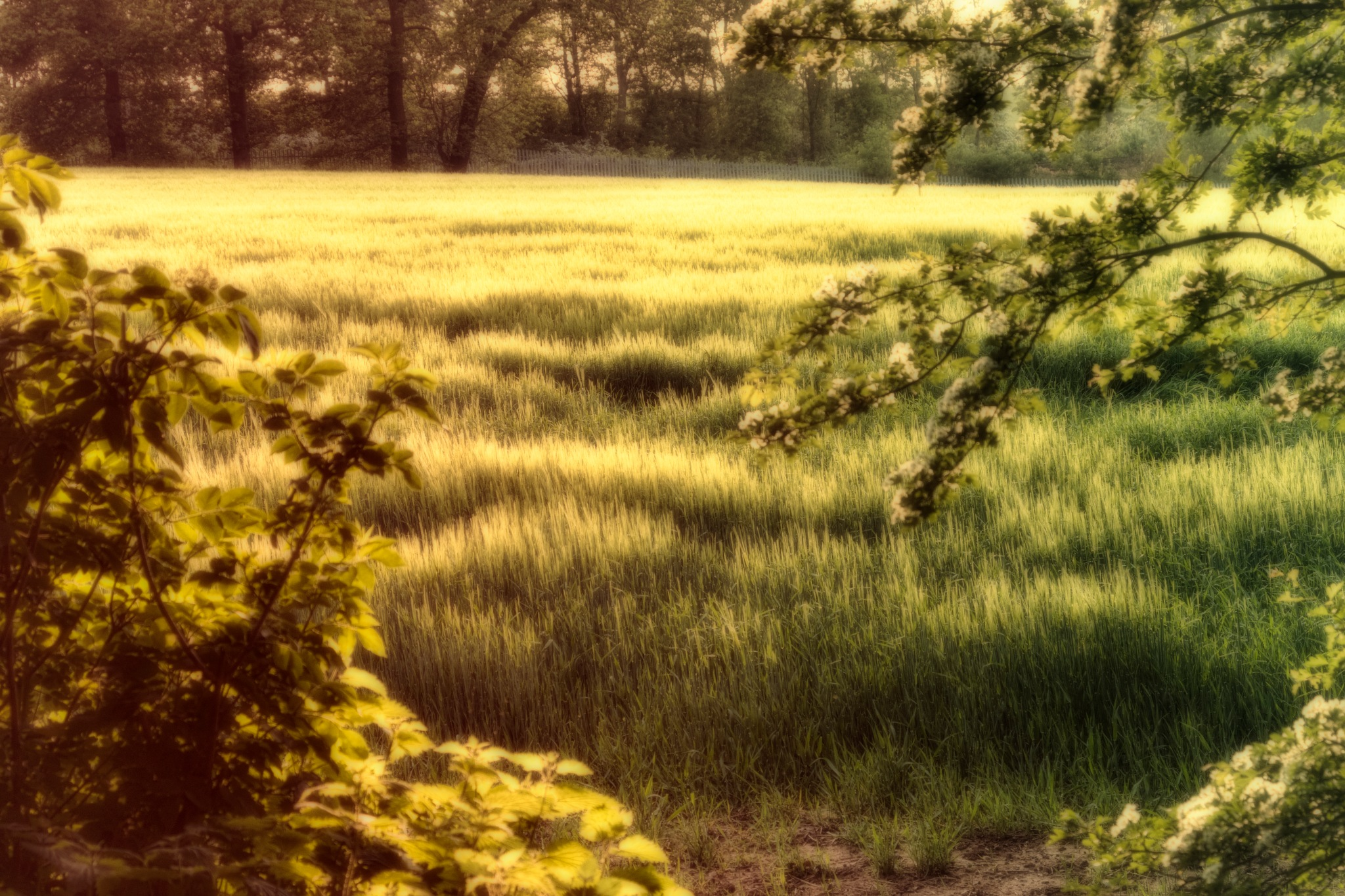 the grass is greener by plw1053