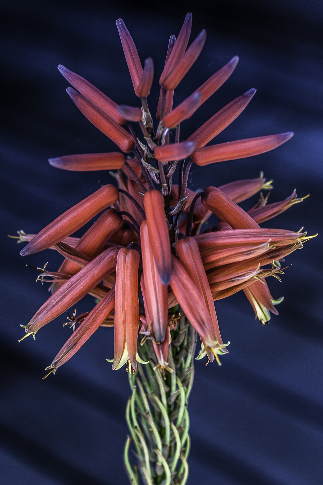 Aloe Blossom by WRKIMAGES