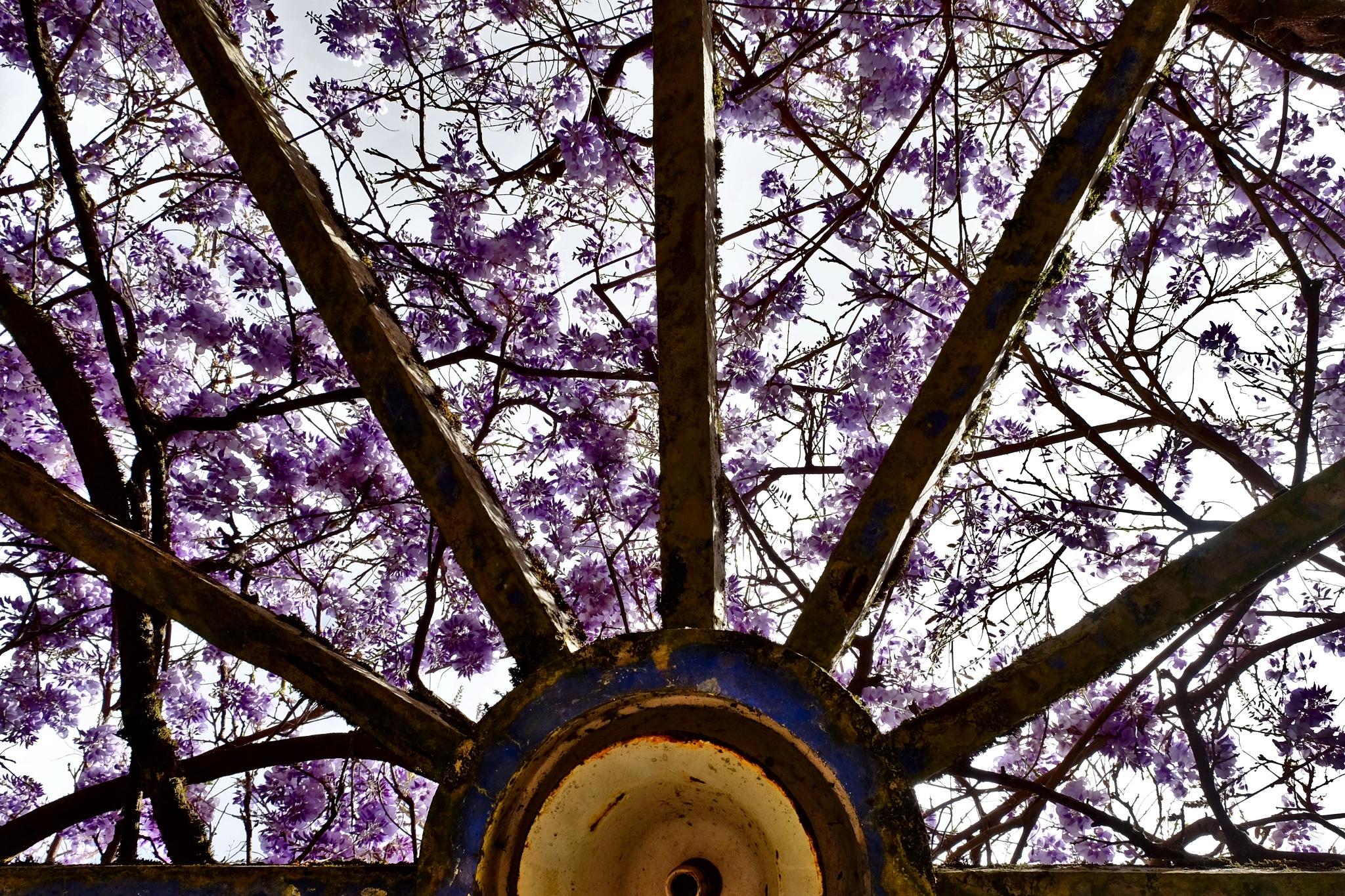 purple sunbeams by Artur Correia