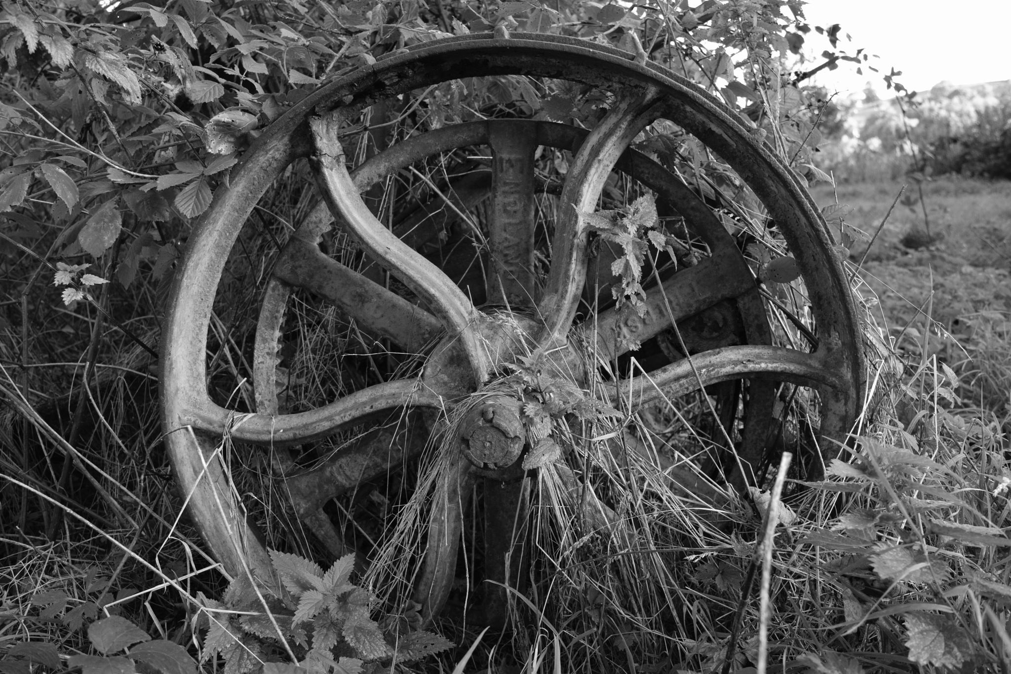 wheel by Jason Clarke