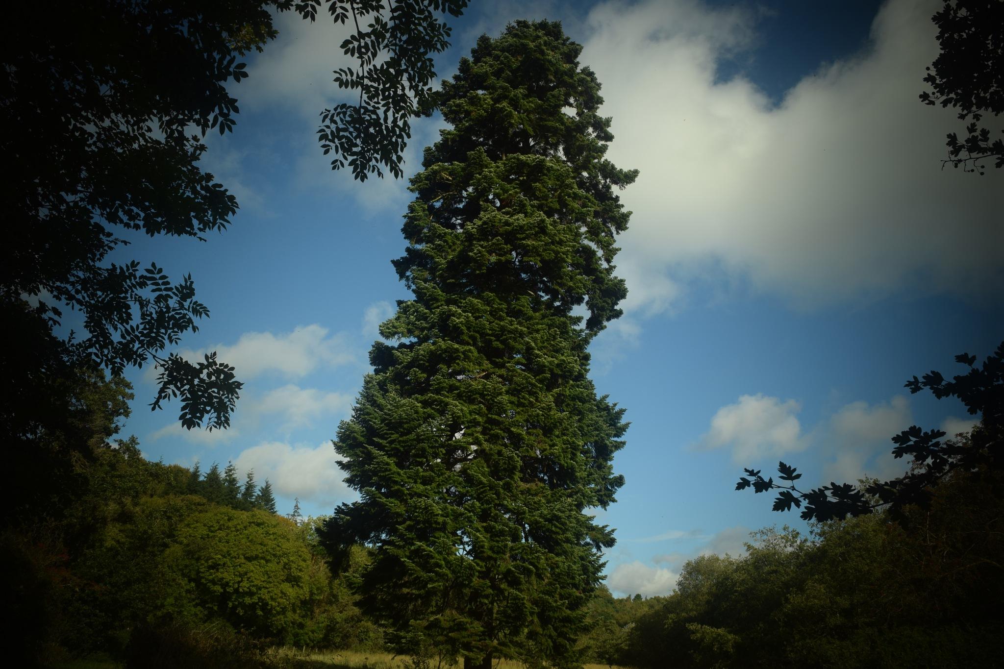 big tree by Jason Clarke