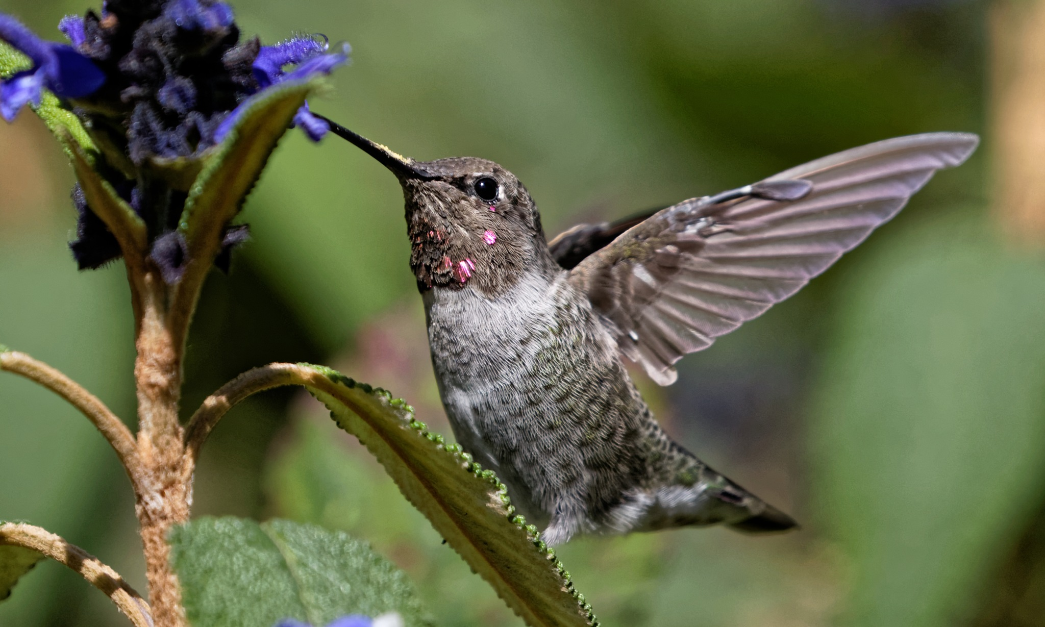 Young Hummer Man by RaphaelRaCcoon