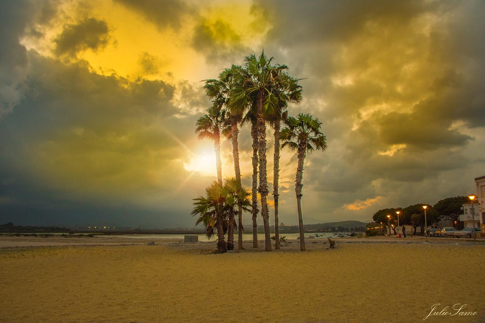 Palmeras en la costa by juliosamo