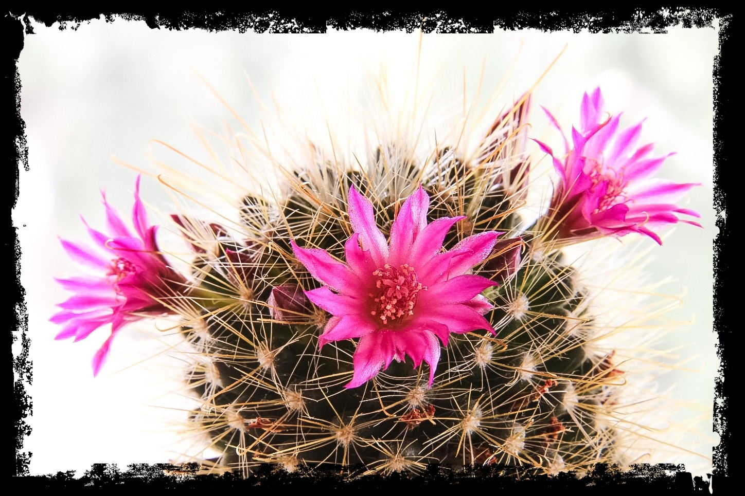 Cactus by Stephan Nenning