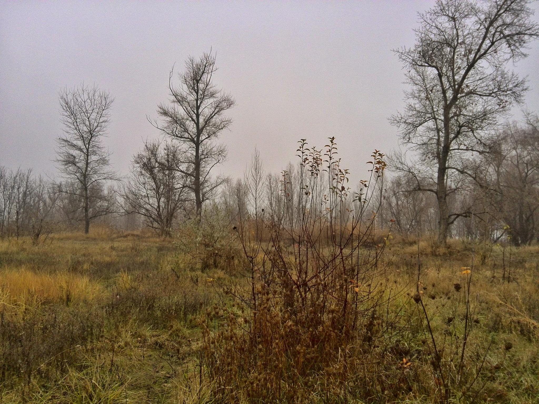 Wetlands  by AP